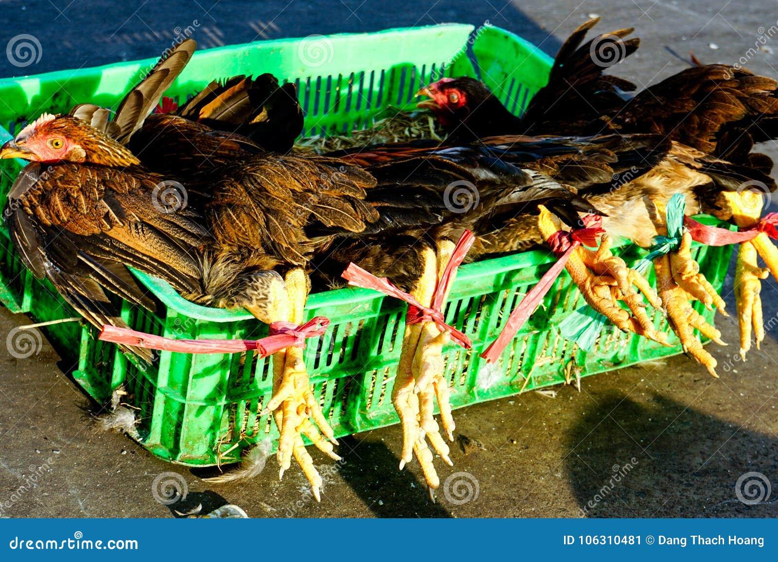Ζωντανά κοτόπουλα για την πώληση στην αγορά Saigon