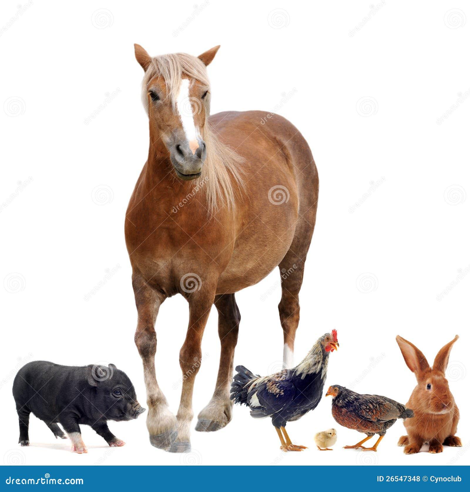 Ζώα αγροκτημάτων