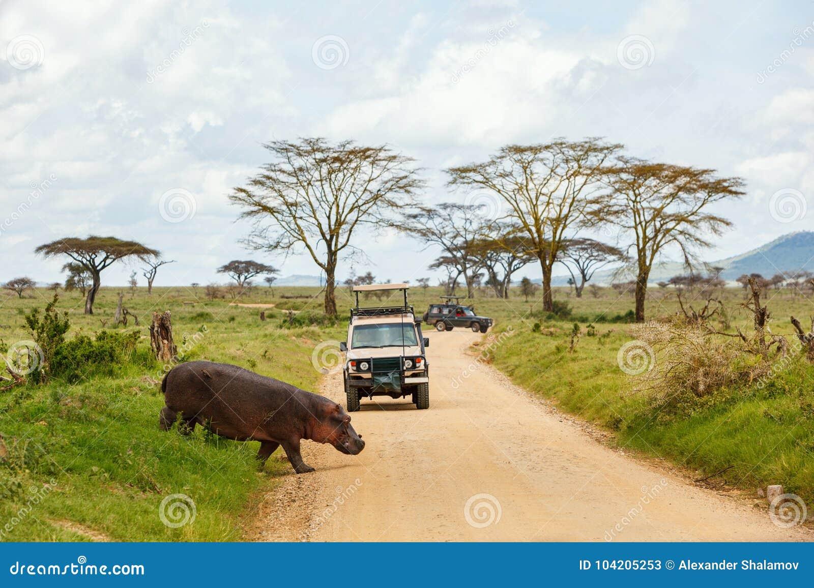 ζώα γύρω από το σαφάρι Τανζανία ngorongoro παιχνιδιών ρυθμιστή κρατήρων αυτοκινήτων