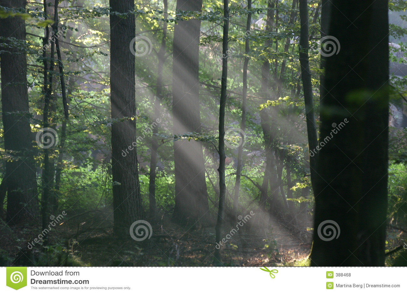 ηλιαχτίδες