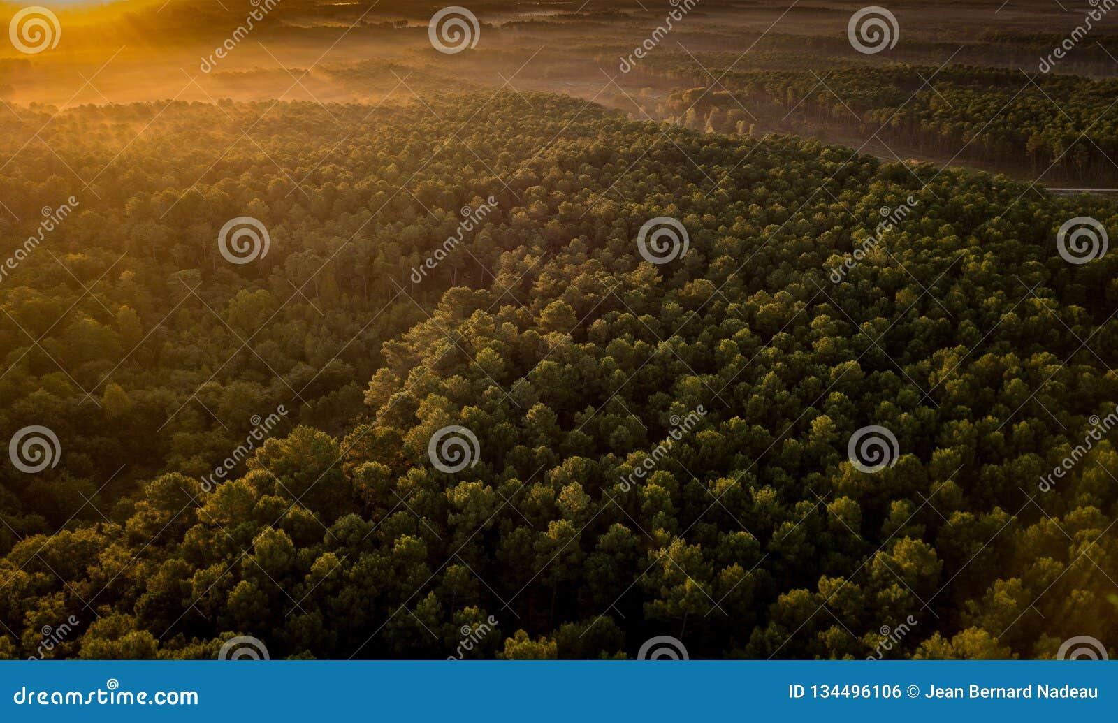 Ηλιοβασίλεμα, δάσος από τον αμμόλοφο du Pilat, λεκάνη του Αρκασόν