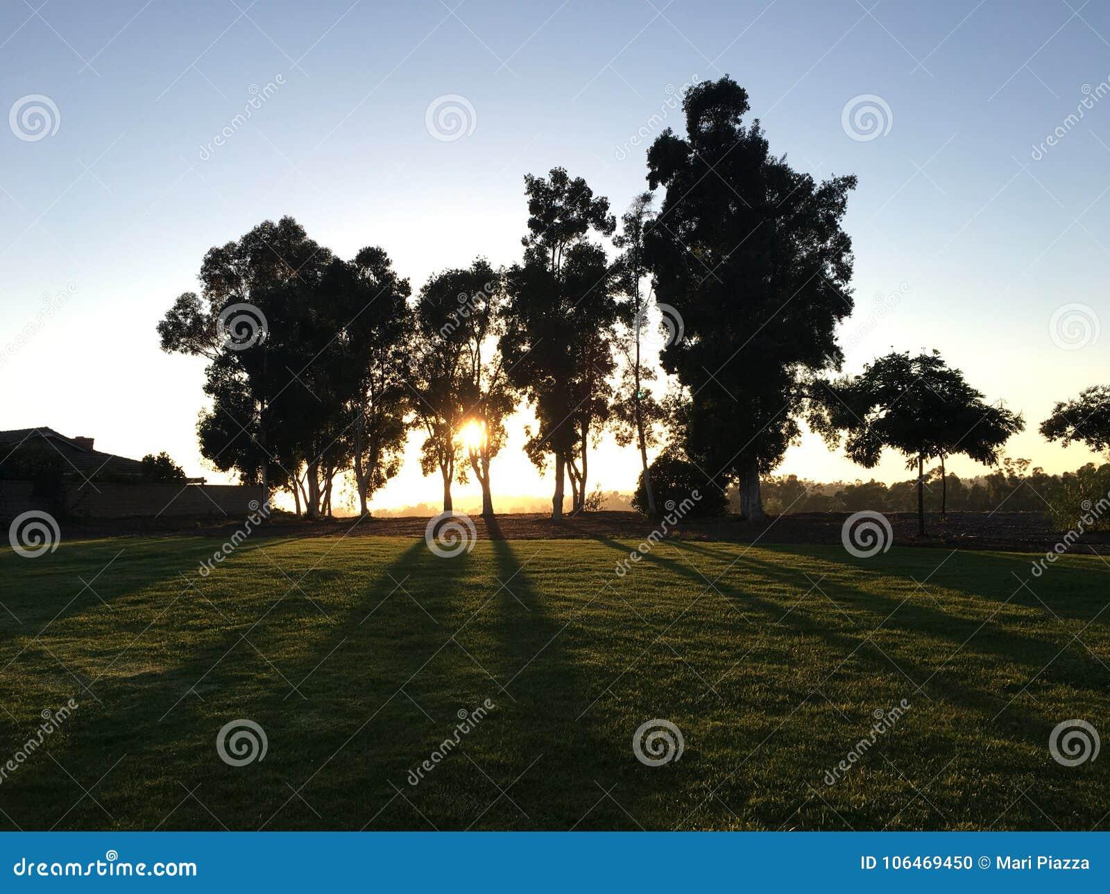 Ηλιοβασίλεμα και δέντρα στο Σαν Ντιέγκο
