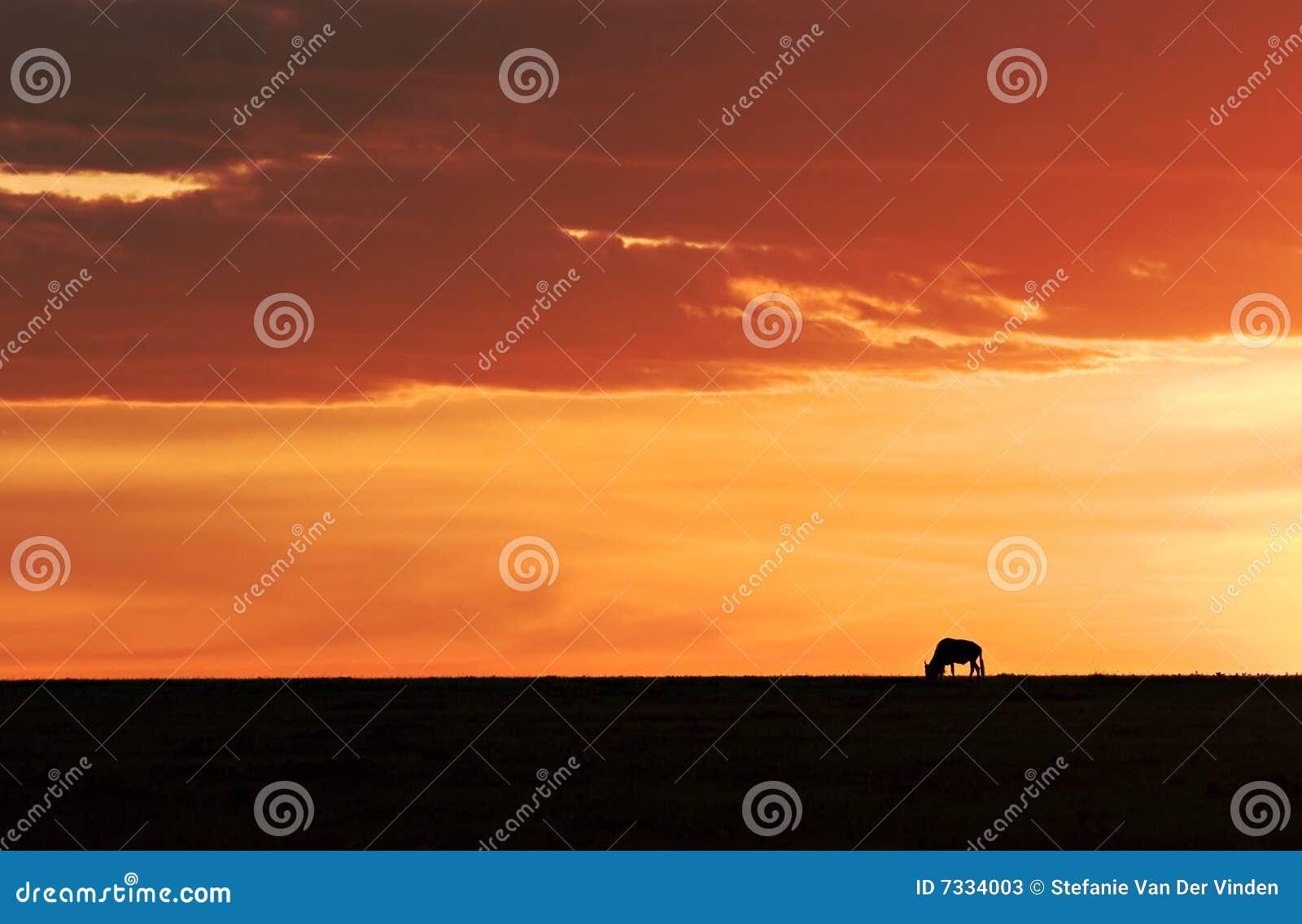 ηλιοβασίλεμα το πιό wildebeesτο