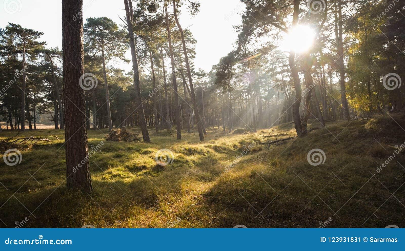 Ηλιοβασίλεμα φθινοπώρου σε ένα δάσος της Misty