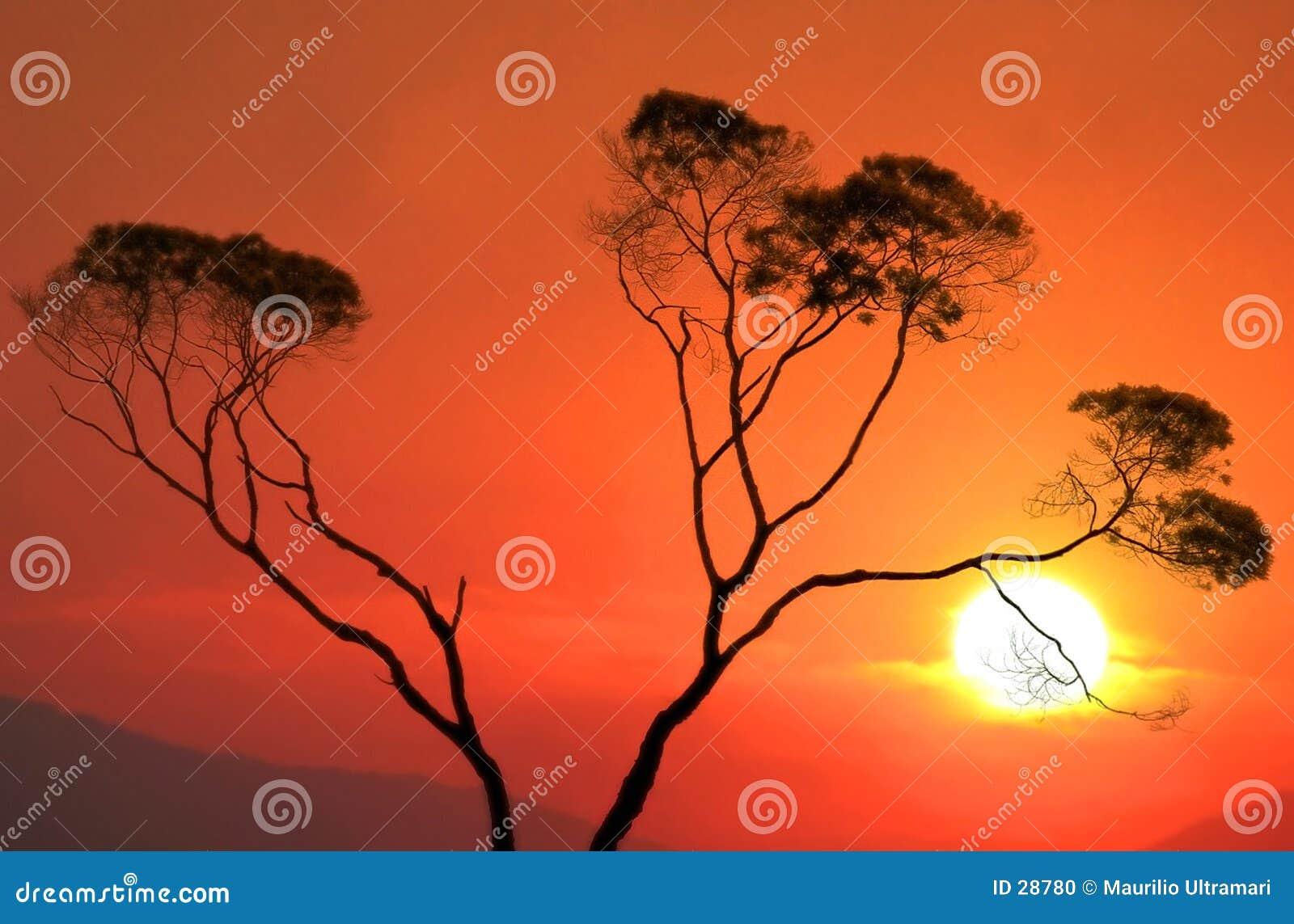 Download ηλιοβασίλεμα στοκ εικόνες. εικόνα από δέντρο, ήλιος, ειρήνη - 28780