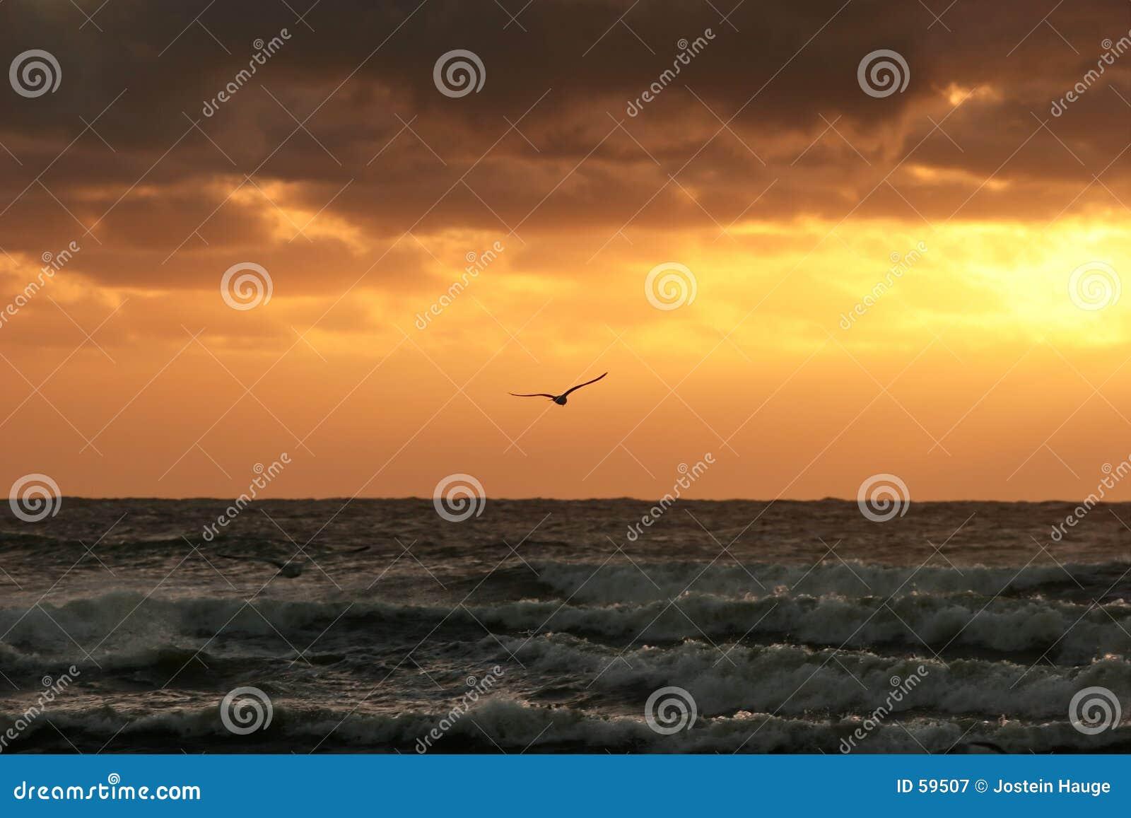 Download ηλιοβασίλεμα στοκ εικόνα. εικόνα από seagull, απέραντος - 59507
