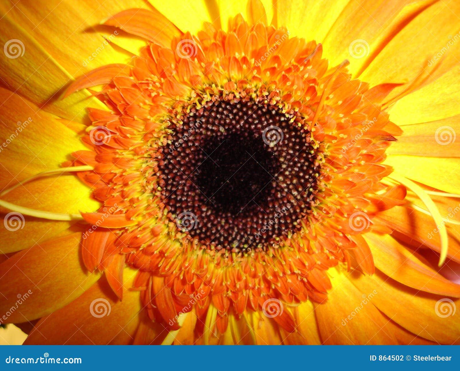 ηλιοφάνεια μορφής λουλουδιών