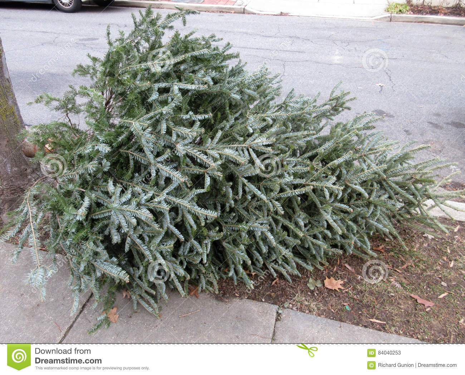 Ημέρα απορριμμάτων για τα χριστουγεννιάτικα δέντρα