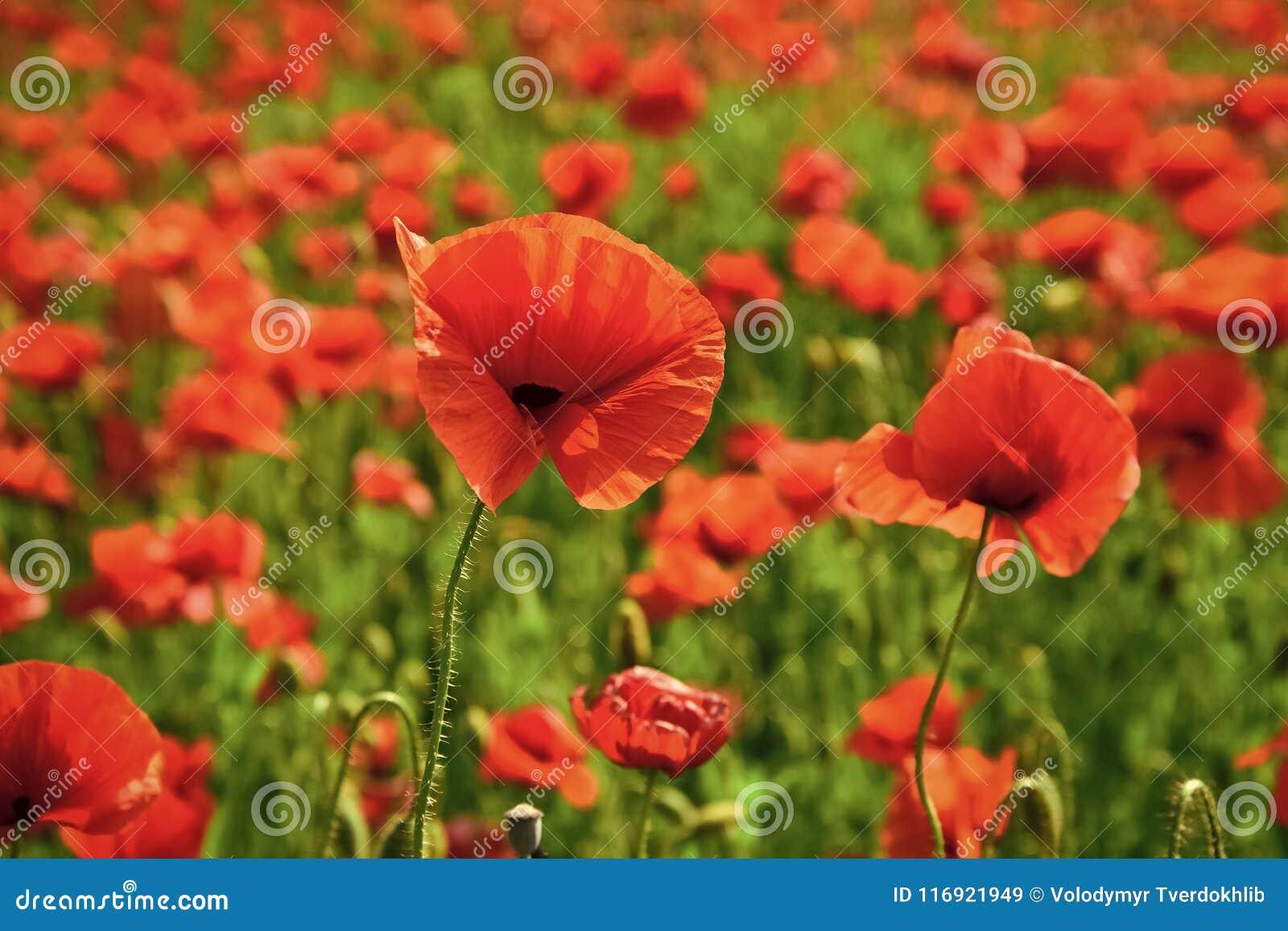 Ημέρα ενθύμησης, ημέρα Anzac, ηρεμία
