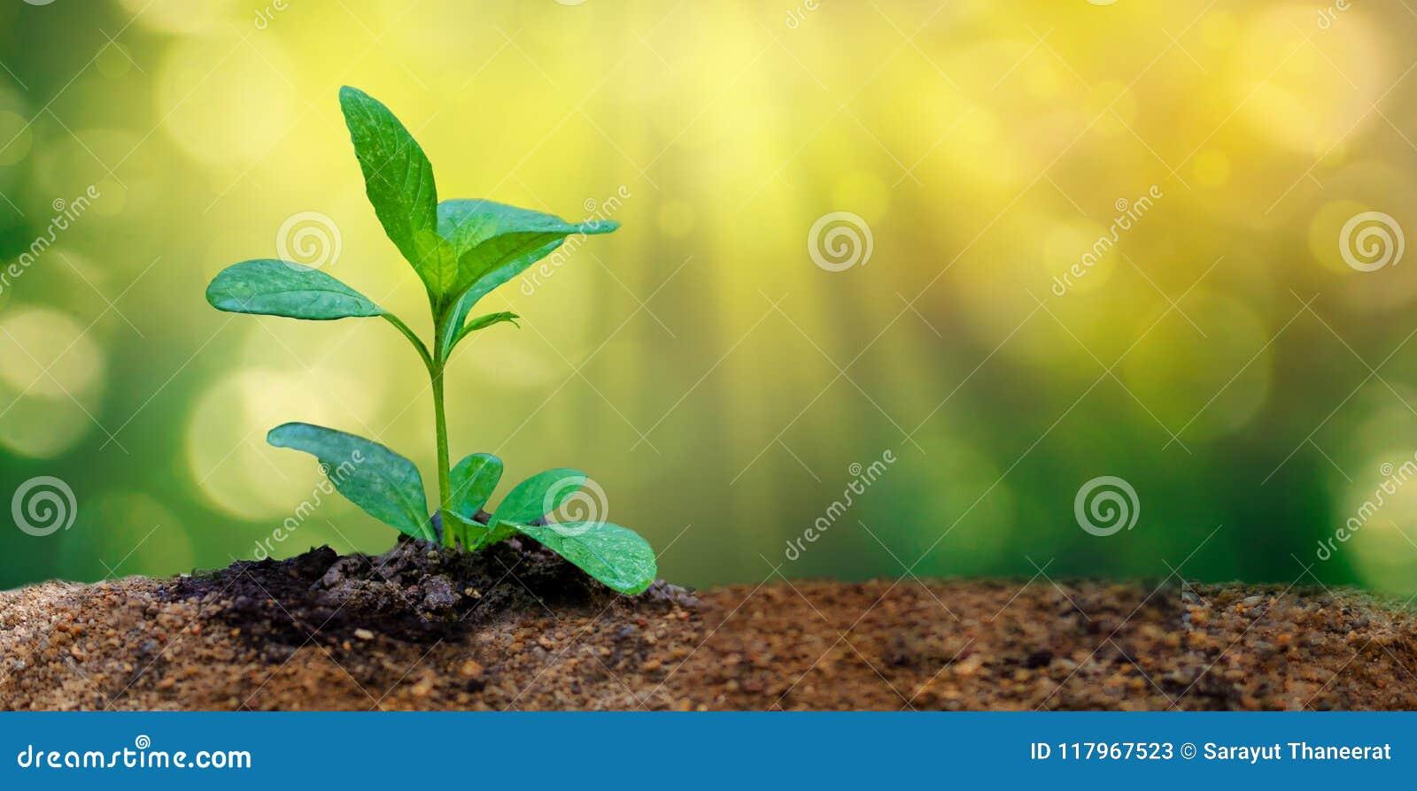 Ημέρα παγκόσμιου περιβάλλοντος που φυτεύει τις νέες εγκαταστάσεις σποροφύτων στο φως πρωινού στο υπόβαθρο φύσης