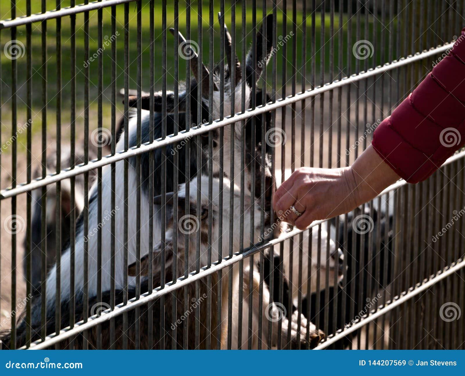 Ημέρα στο ζωολογικό κήπο