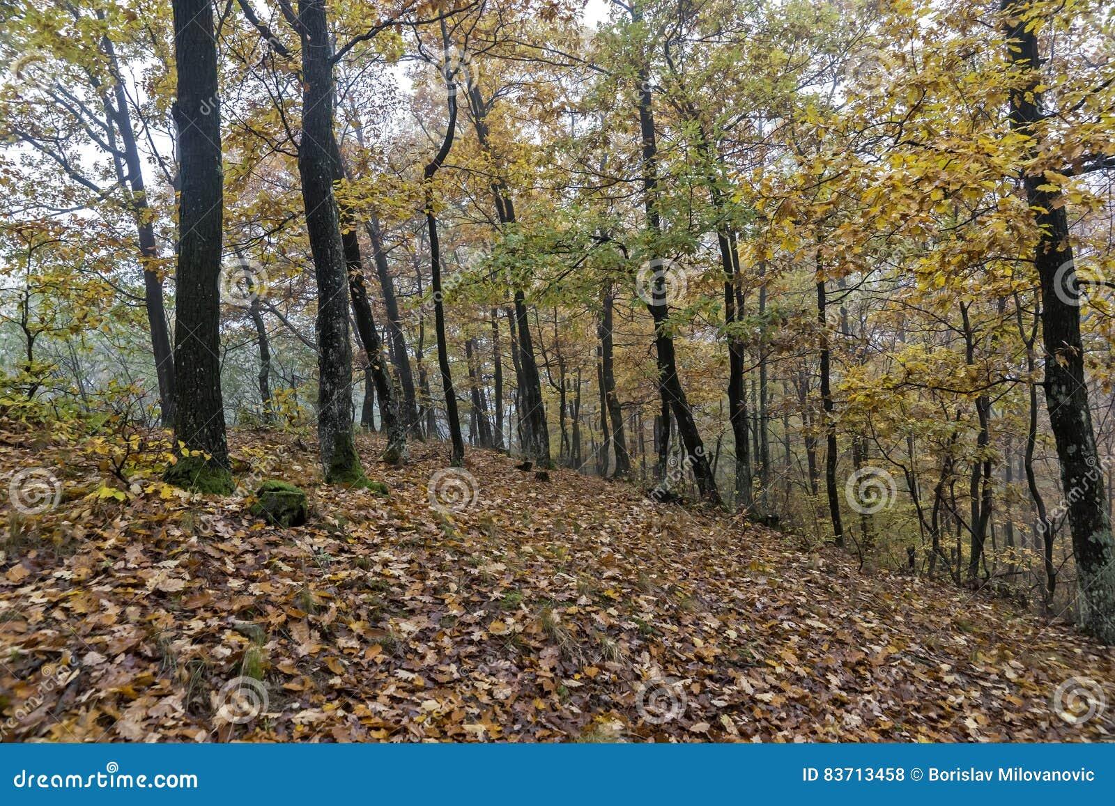 Ημέρα φθινοπώρου στα ξύλα