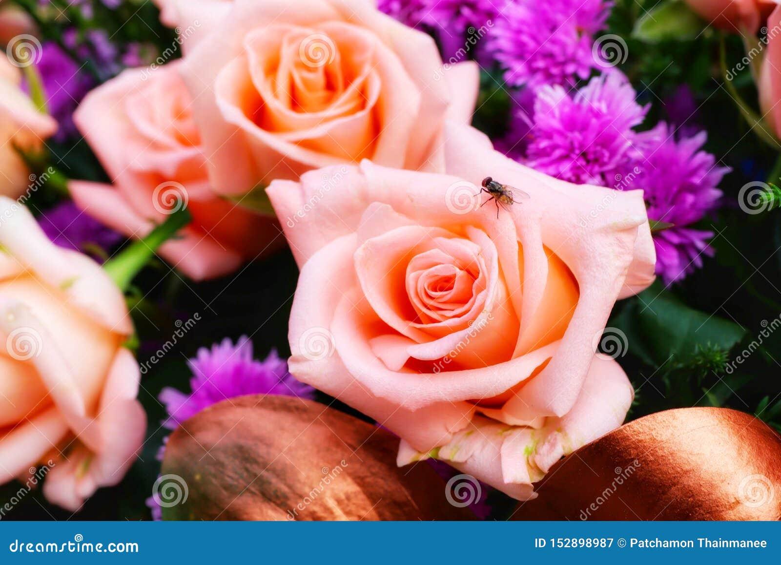Η άποψη κινηματογραφήσεων σε πρώτο πλάνο, τοπ άποψη, αυξήθηκε, πορτοκαλιά, όμορφη κρητιδογραφία, ανθοδέσμη των λουλουδιών