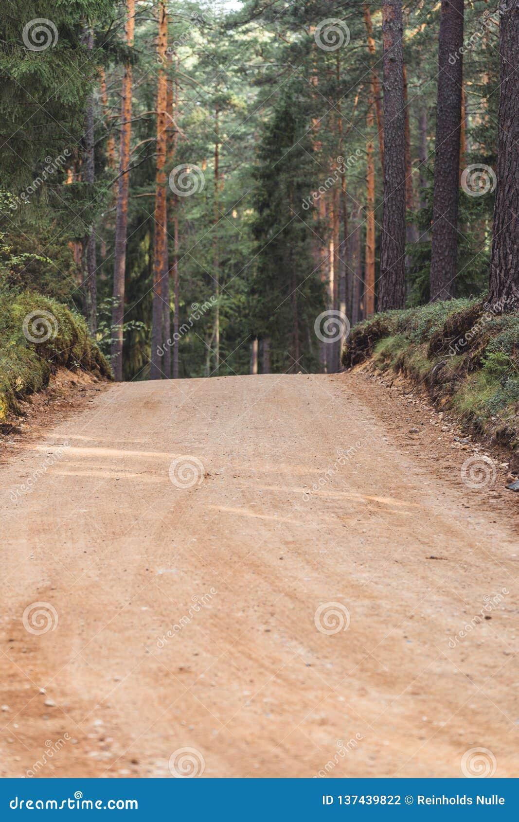 Η άποψη της πορείας πεζοπορίας τουριστών δασικών δρόμων, τίτλος βαθύτερος στα ξύλα την ηλιόλουστη θερινή ημέρα, θόλωσε εν μέρει τ
