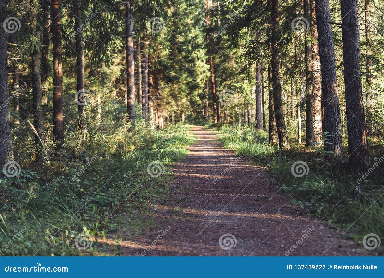 Η άποψη του δασικού δρόμου, τίτλος βαθύτερος στα ξύλα την ηλιόλουστη θερινή ημέρα, θόλωσε εν μέρει την εικόνα με ελεύθερου χώρου