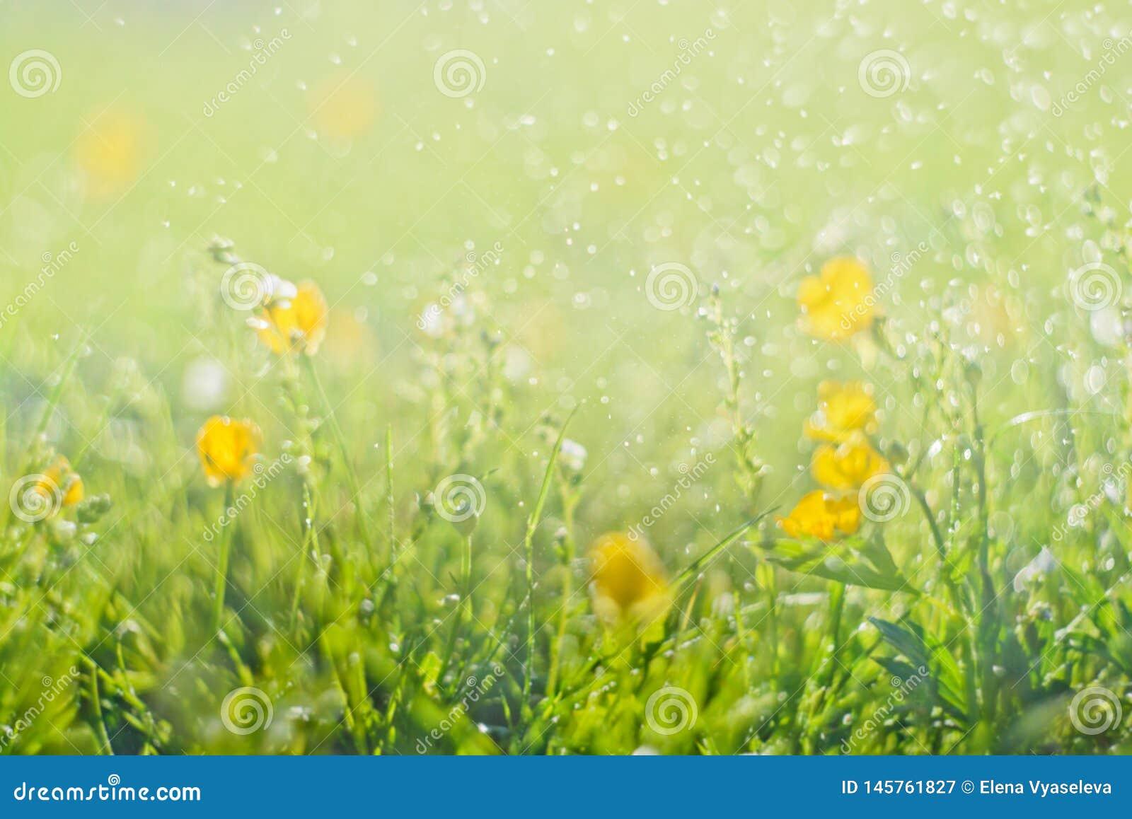 Η αφηρημένη πράσινη φρέσκια χλόη και ο άγριος μικρός κίτρινος τομέας λουλουδιών με την περίληψη θόλωσαν το φύλλωμα και το φωτεινό