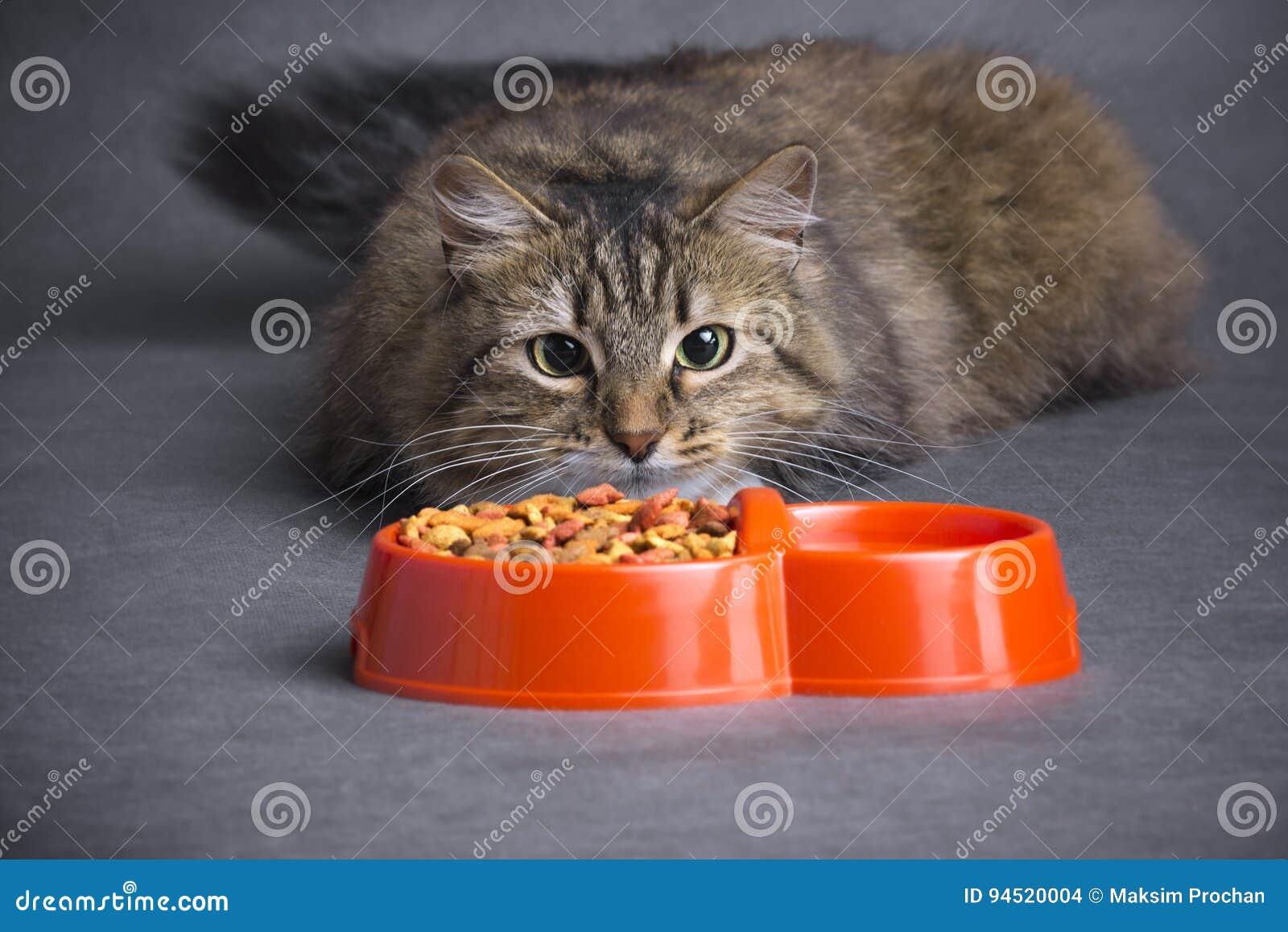 Η γάτα εξετάζει ένα κύπελλο της τροφής