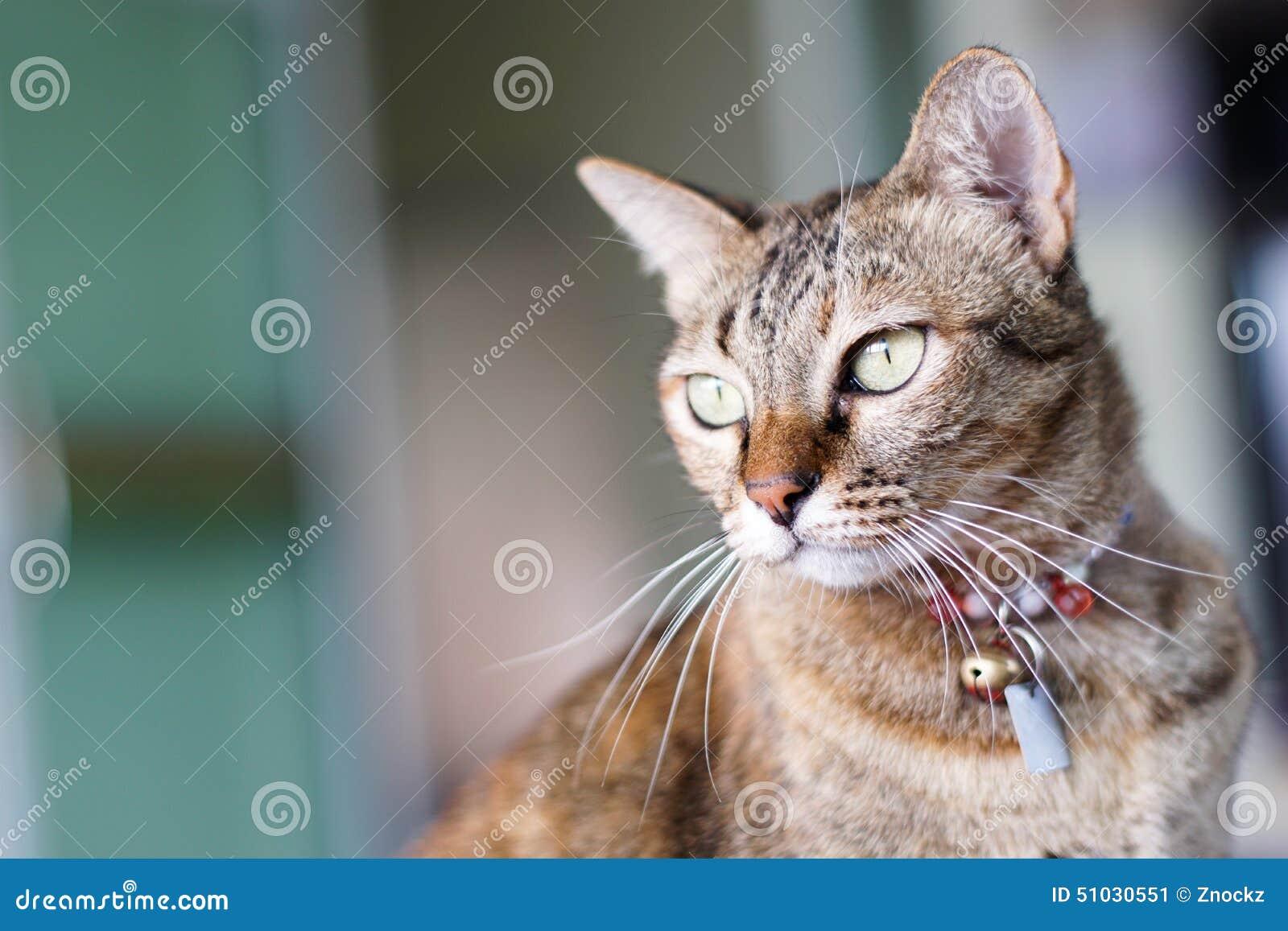 Η γάτα κοιτάζει επίμονα την ταχυδρόμηση