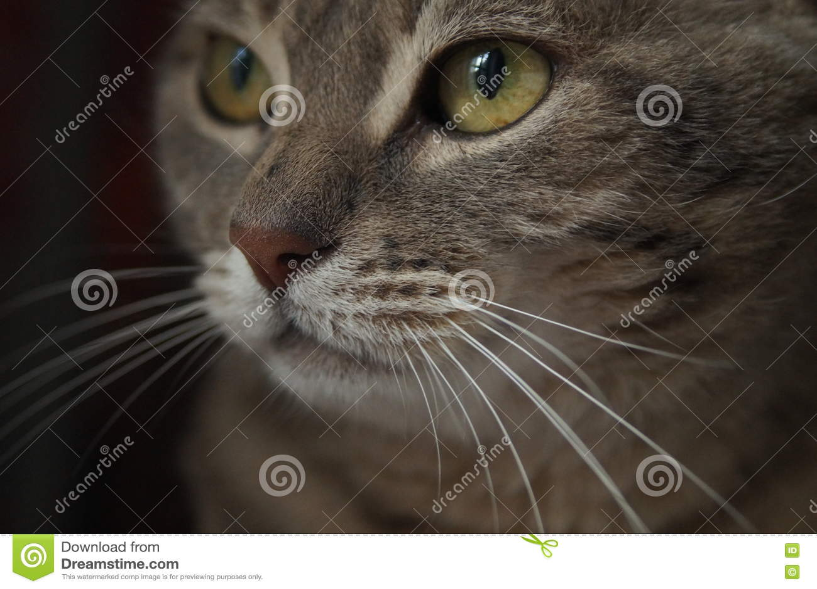 η γάτα κοιτάζει