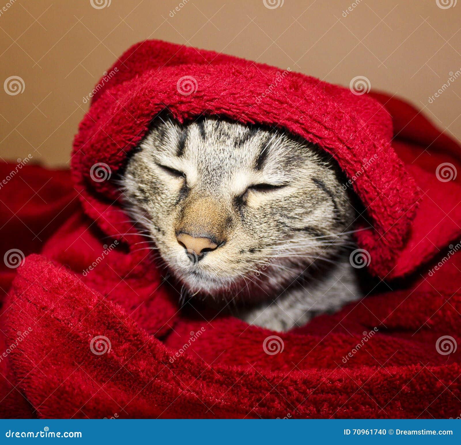 Η γάτα με τα πράσινα μάτια βρίσκεται κάτω από το κόκκινο κάλυμμα