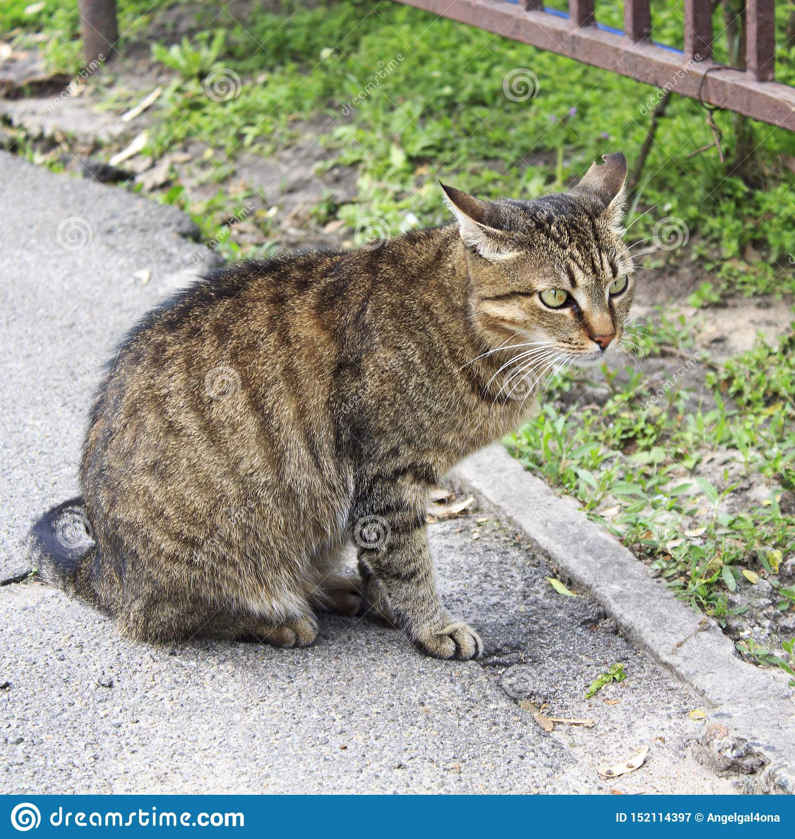 Η γάτα, οδός, πορτρέτο, πέτρα, χαριτωμένος, ζωική, βρίσκεται, τιγρέ, στήριξη, φύση, κατοικίδιο ζώο, όμορφο, πρόσωπο, υπαίθριο, γα