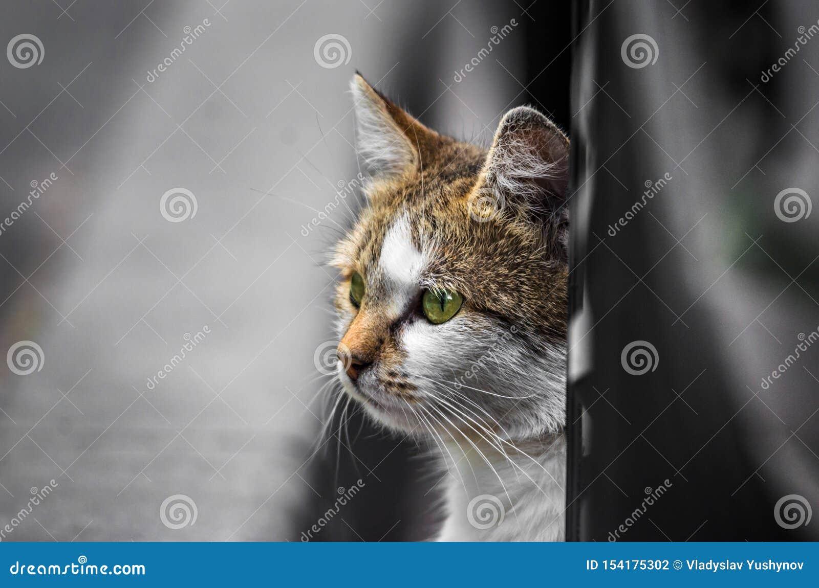 Η γάτα οδών κάτω από το αυτοκίνητο κοιτάζει έξω στην οδό σε αναζήτηση κάτι