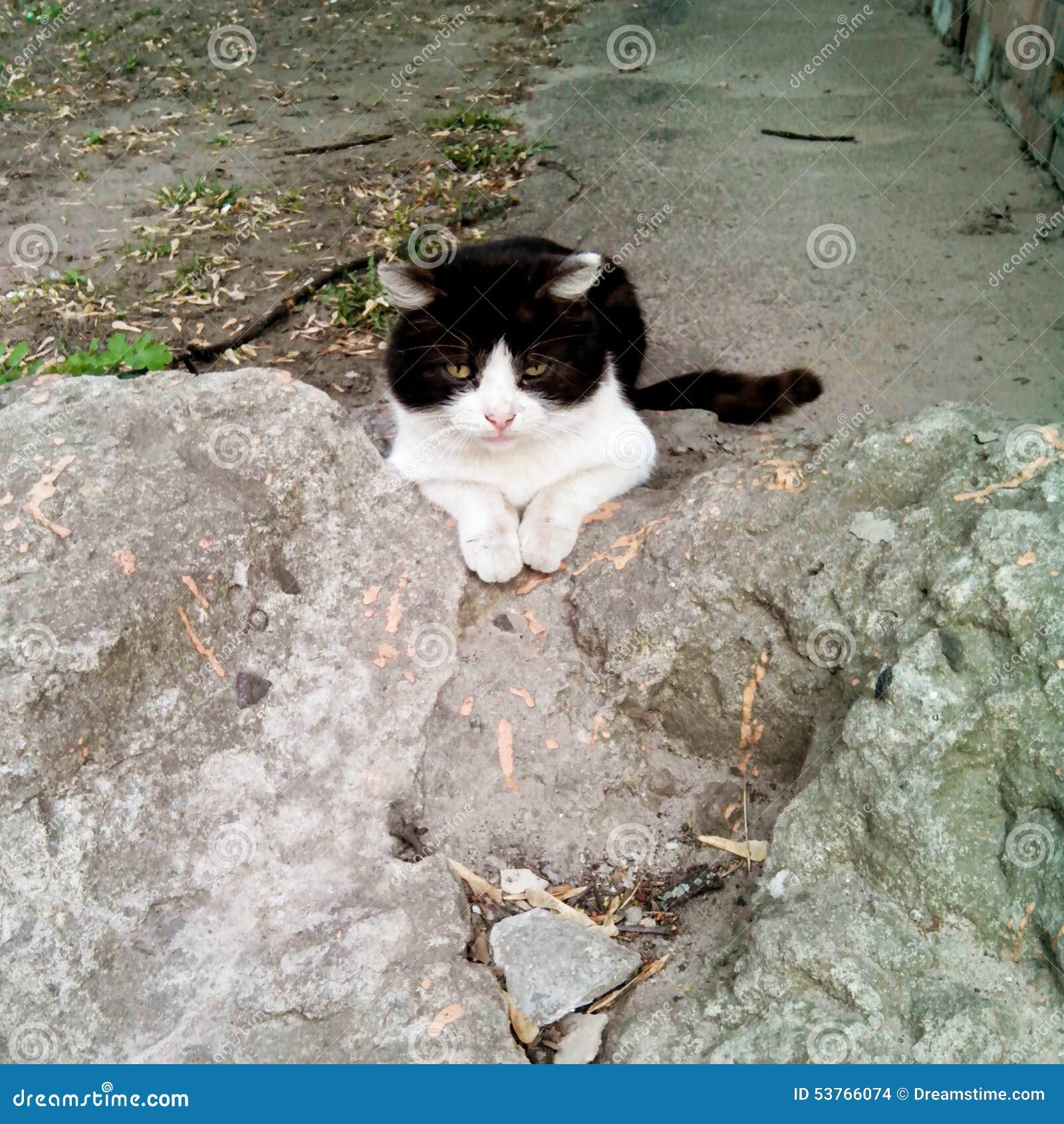 Η γάτα πονηριών