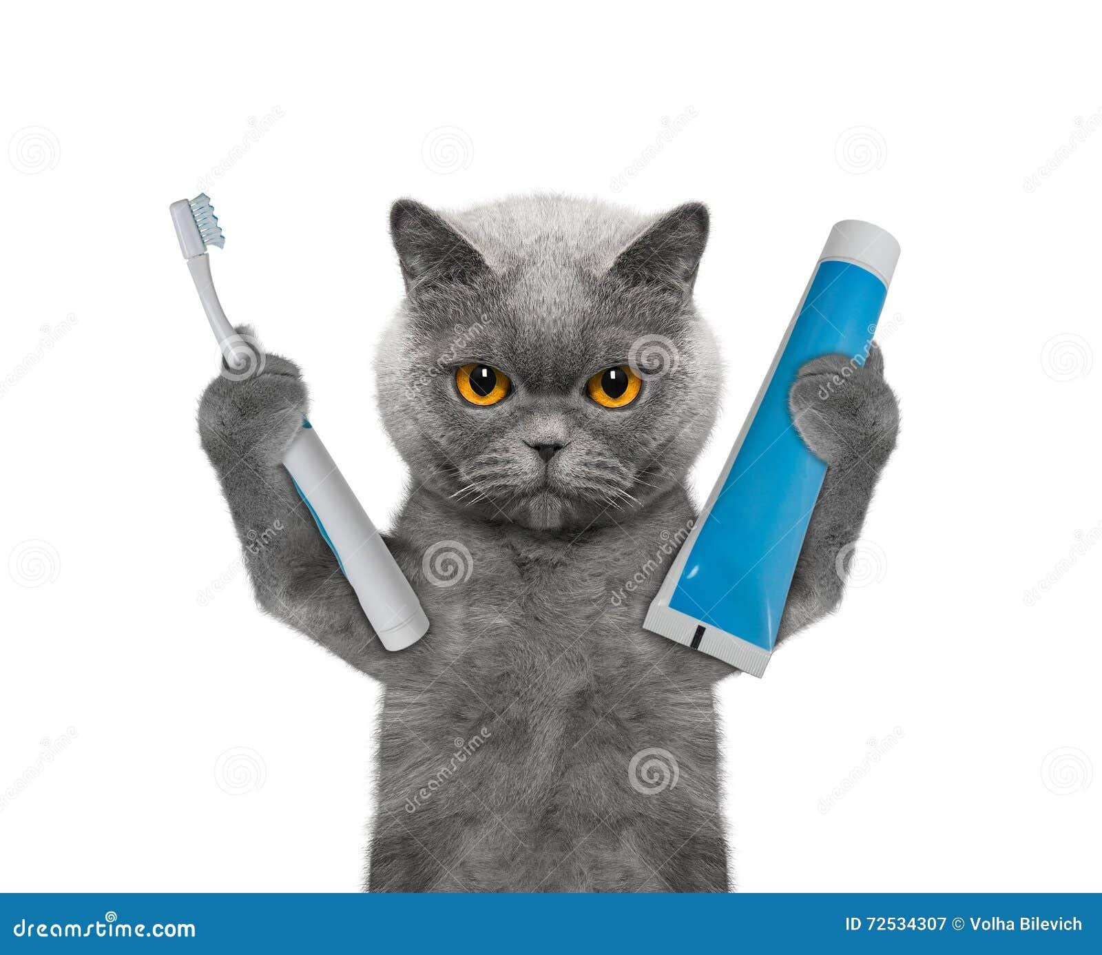Η γάτα πρόκειται να καθαρίσει τα δόντια