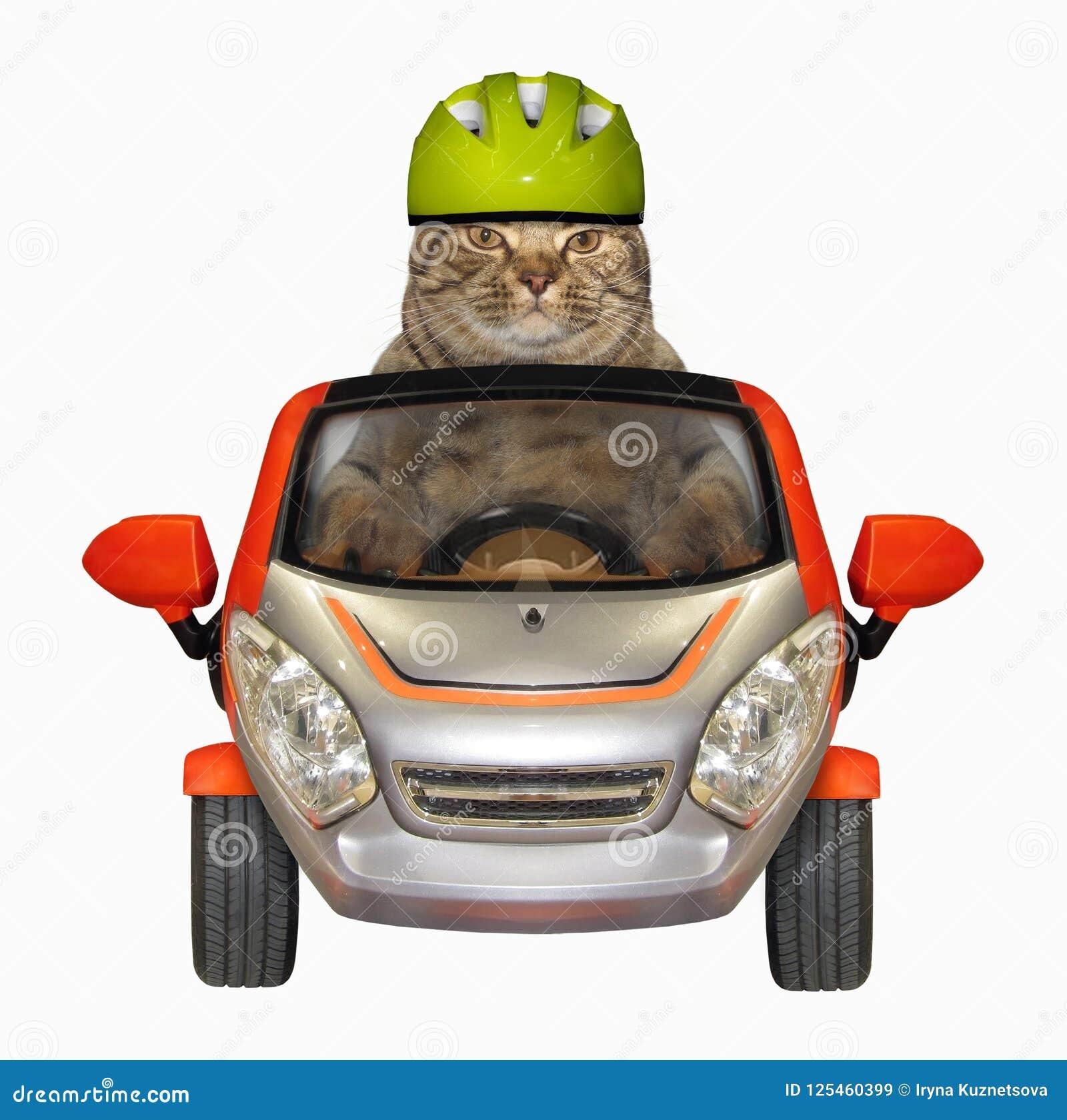 Η γάτα σε ένα κράνος οδηγεί ένα μικρό αυτοκίνητο