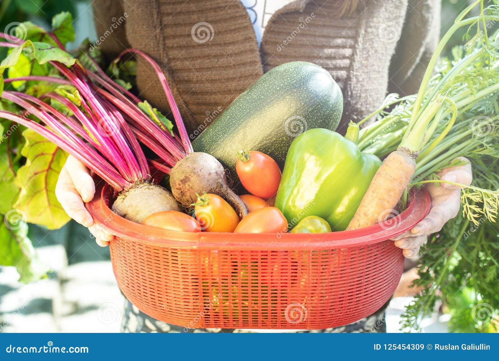 Η γυναίκα κρατά υπό εξέταση ένα κόκκινο κιβώτιο με τα λαχανικά σε έναν κήπο κουζινών
