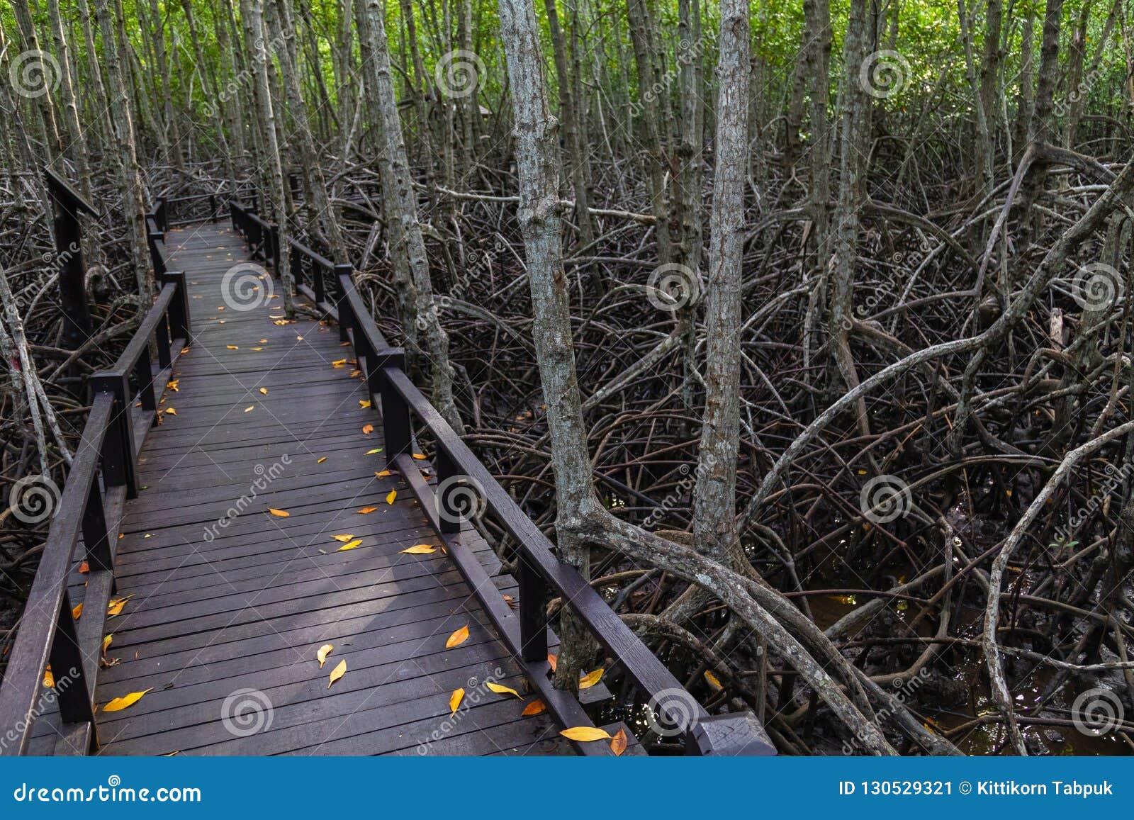 Η διάβαση πεζών στην ξύλινη γέφυρα στο δάσος