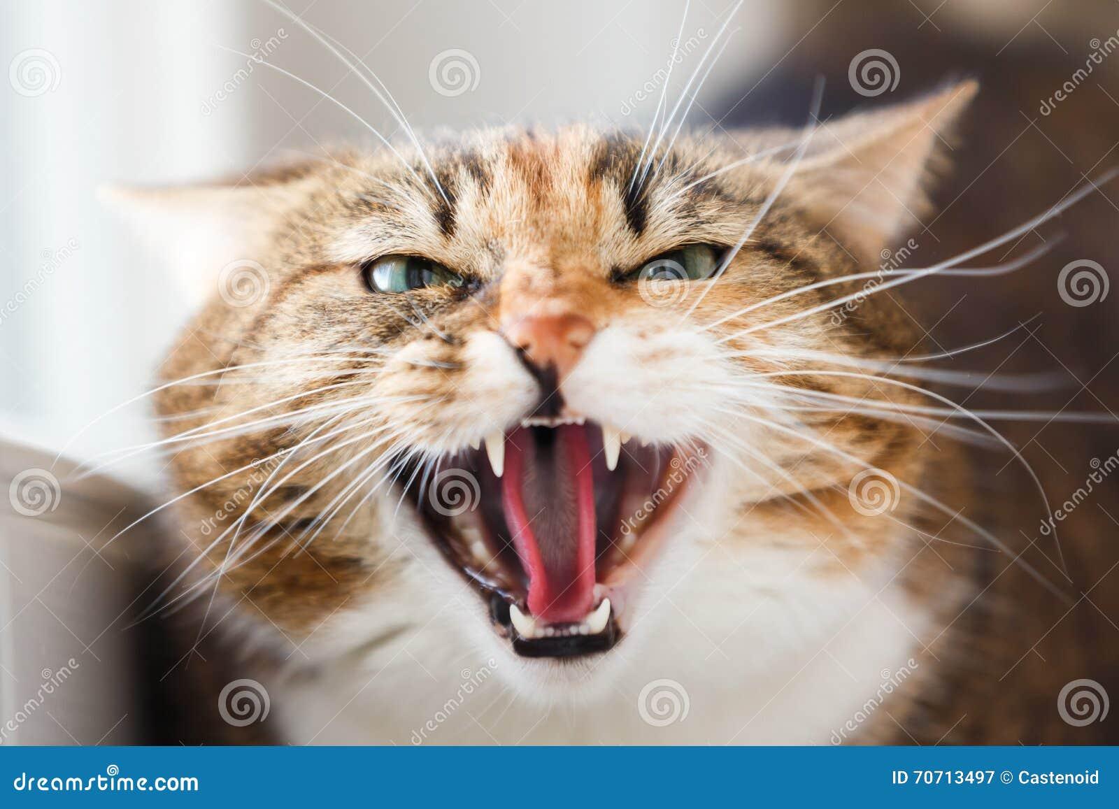 Η επιθετικότητα γατών