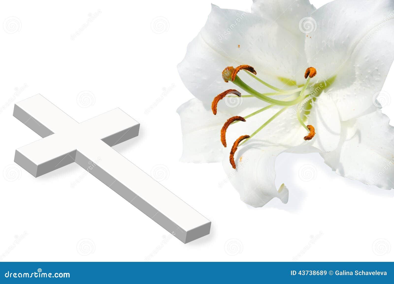 Η λευκιά Lili και λευκός σταυρός