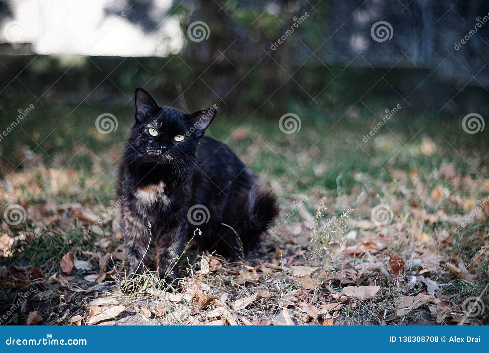 Η ευμετάβλητη άστεγη μαύρη γάτα εξετάζει σας σε μια μεγάλη πόλη