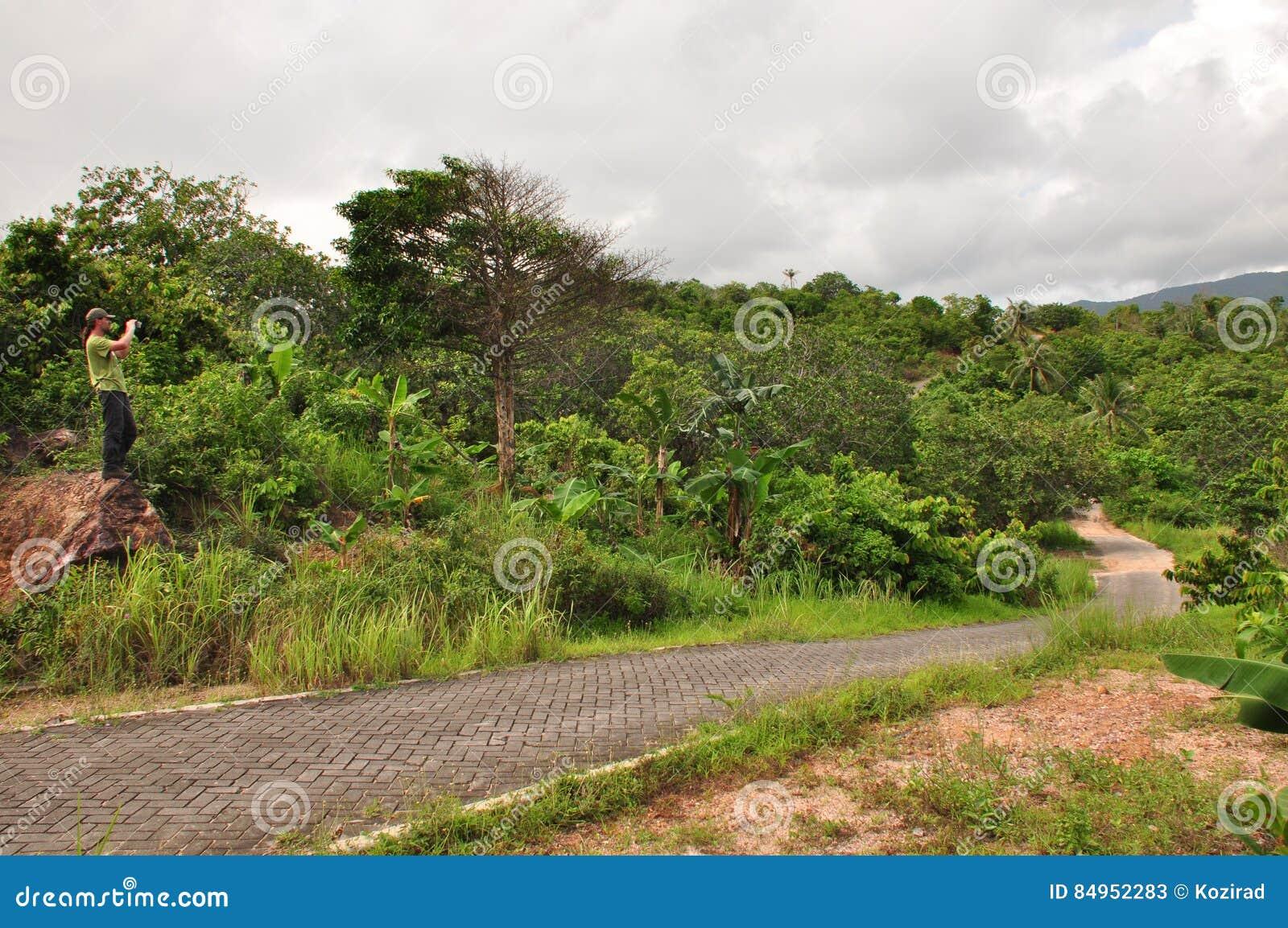 Η ζούγκλα στην Ινδονησία Ιάβα Οι φτέρες και οι φοίνικες δέντρων στις κλίσεις του shit