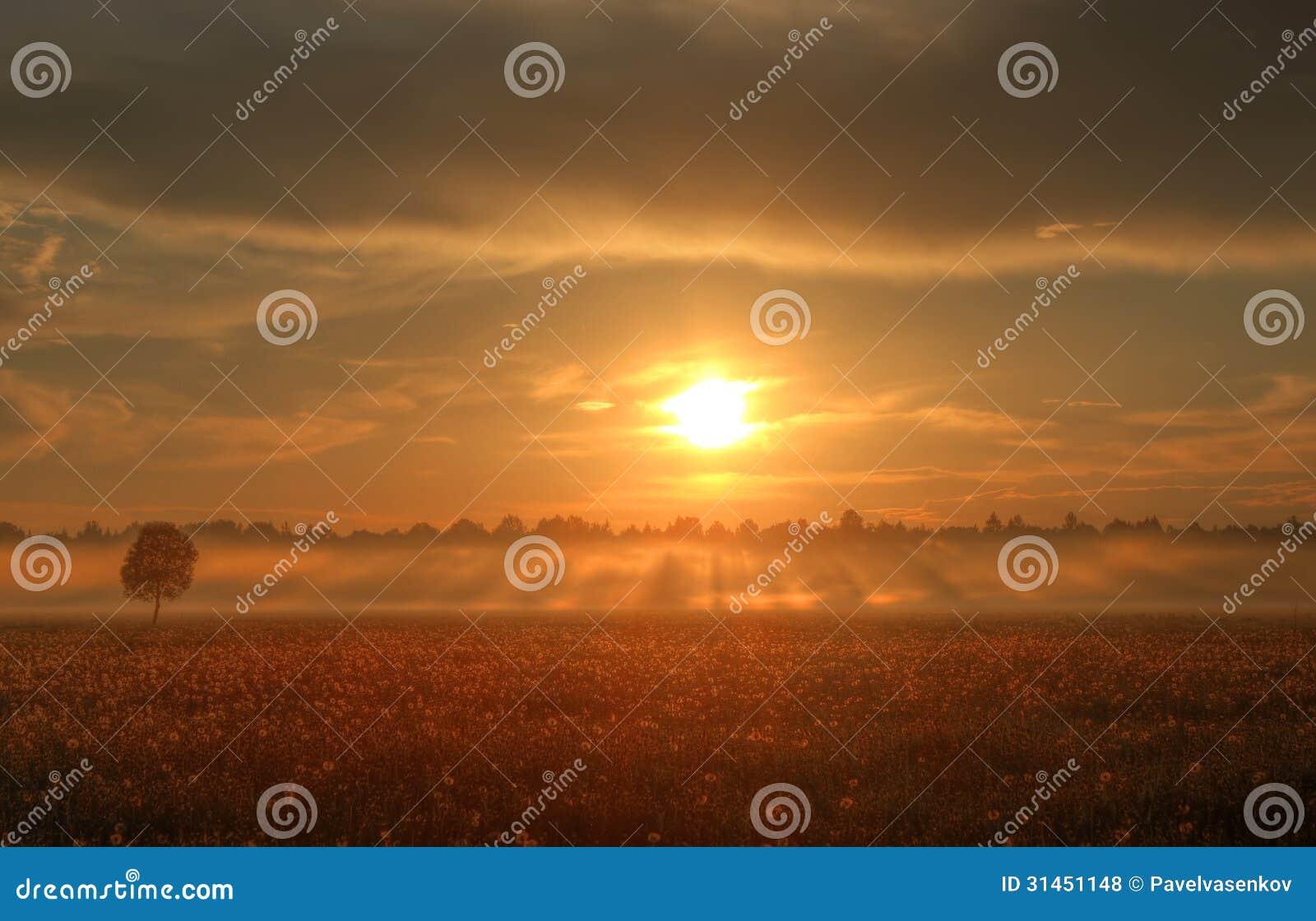 Ηλιοβασίλεμα πέρα από έναν τομέα των πικραλίδων, Ρωσία
