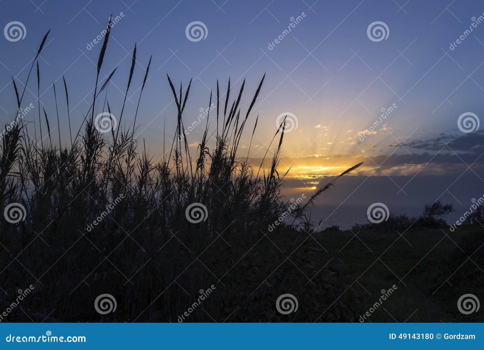 Ηλιοβασίλεμα πέρα από τους βλαστούς μπαμπού