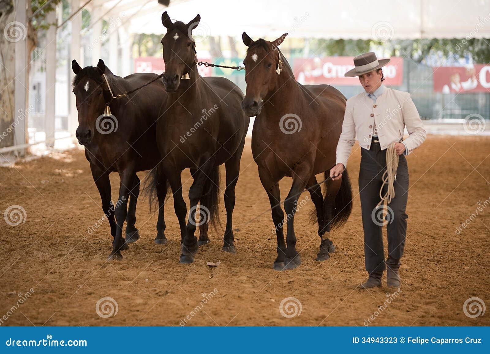 Η ιππική λειτουργία δοκιμής με 3 καθαρά ισπανικά άλογα, κάλεσε επίσης τα cobras 3 φοράδες