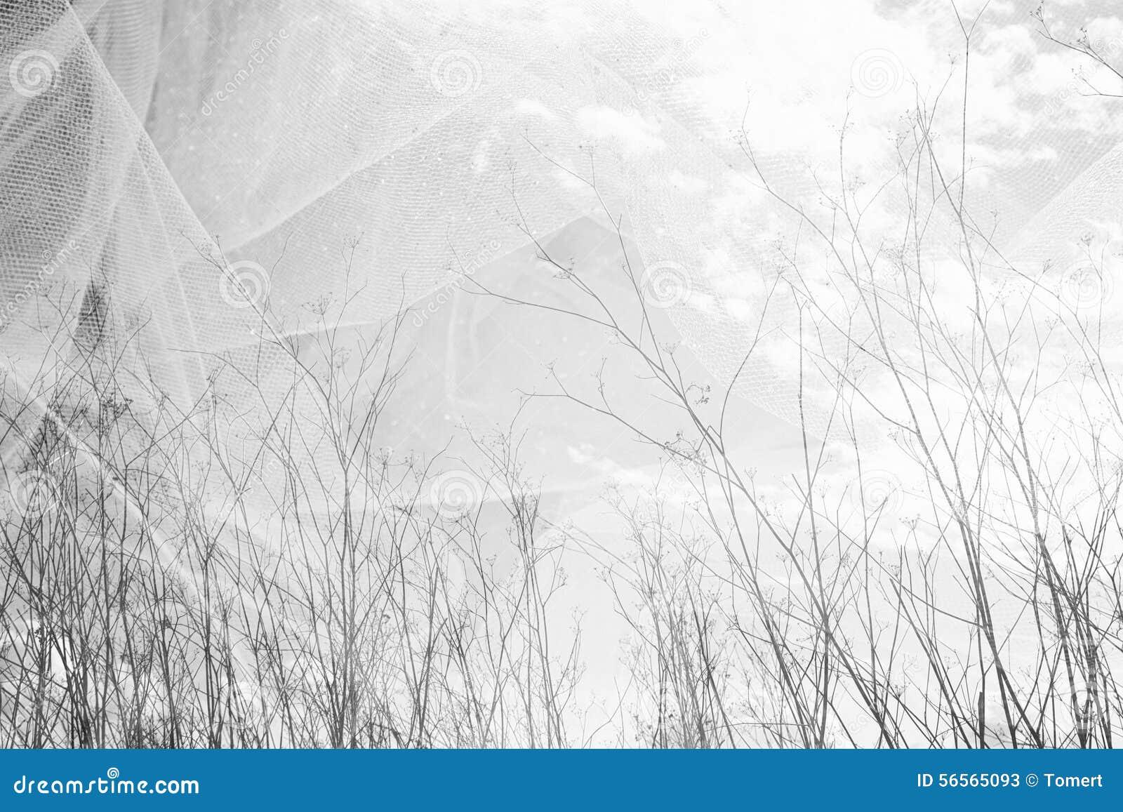 Download Η διπλή φωτογραφία έκθεσης του δέντρου διακλαδίζεται το φθινόπωρο ενάντια στον ουρανό και το κατασκευασμένο στρώμα υφάσματος Στοκ Εικόνα - εικόνα από δημιουργικότητα, brampton: 56565093