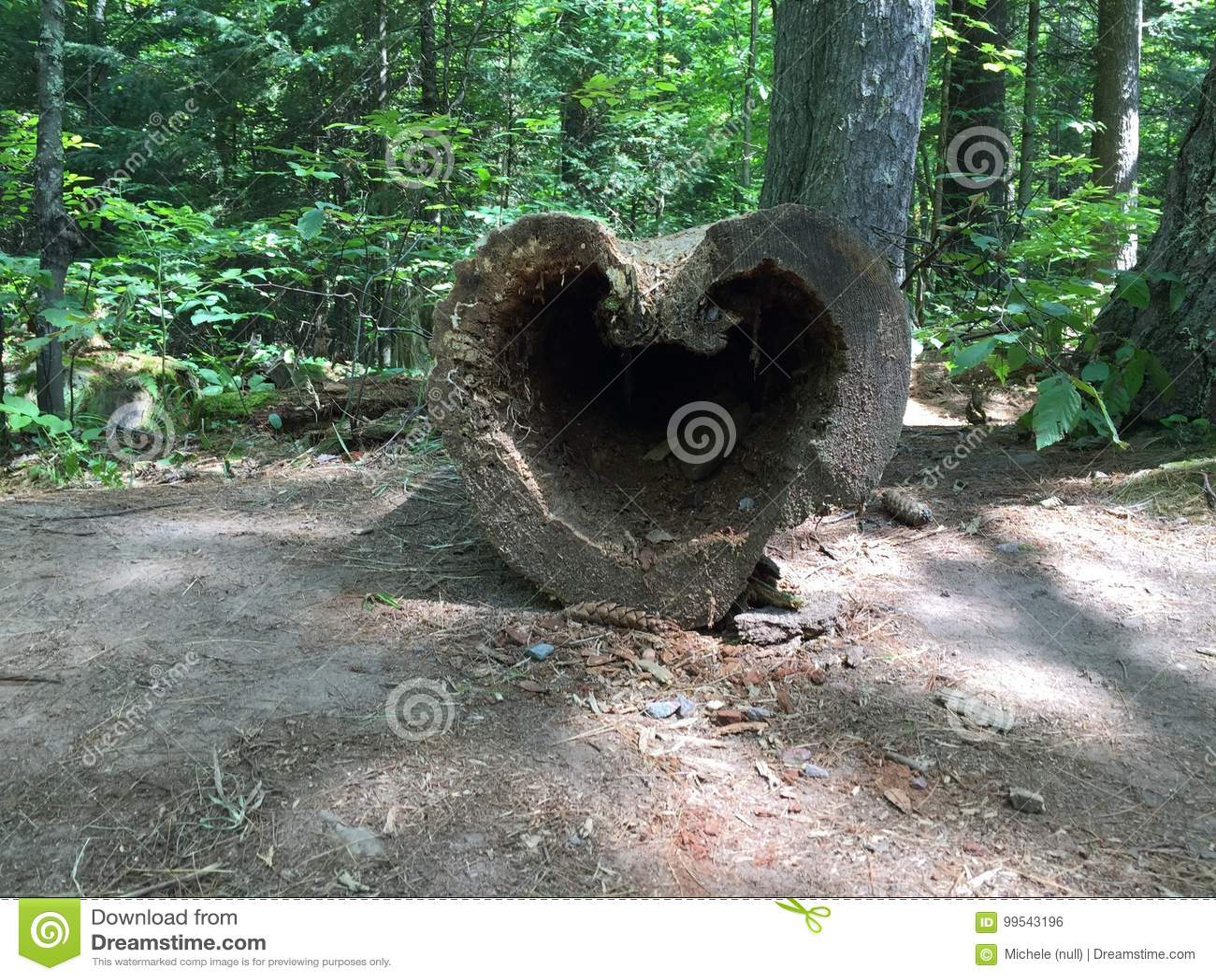 Η καρδιά της φύσης