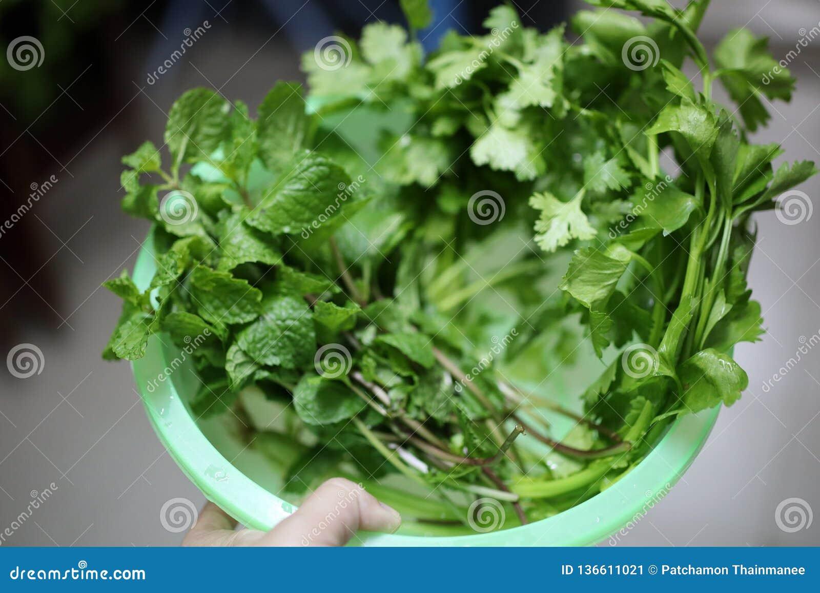 Η κινηματογράφηση σε πρώτο πλάνο των λαχανικών με το πράσινο χρώμα είναι μια σημαντική ουσία, οι βοήθειες χλωροφύλλης μειώνουν το
