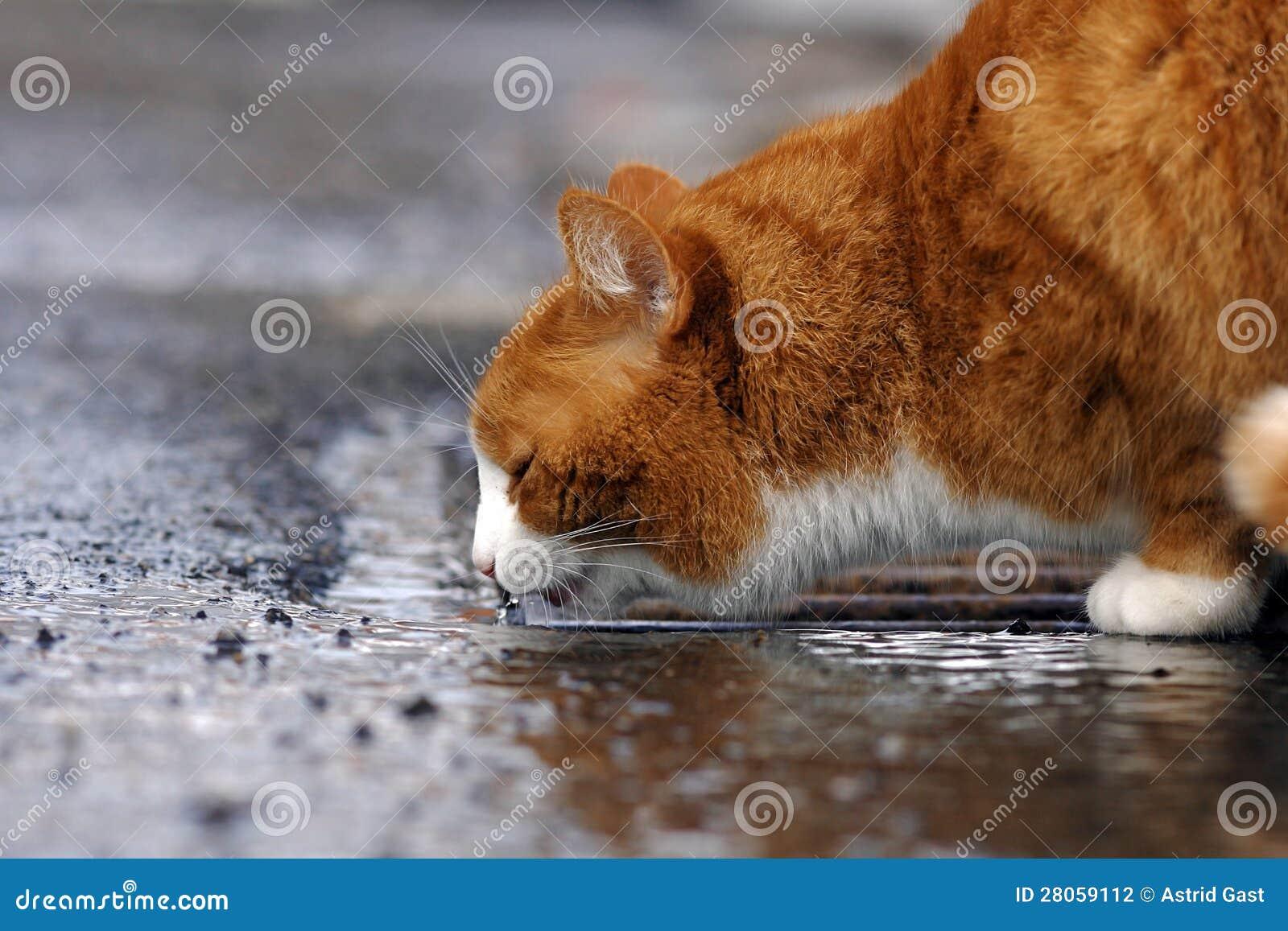 Η κόκκινη γάτα