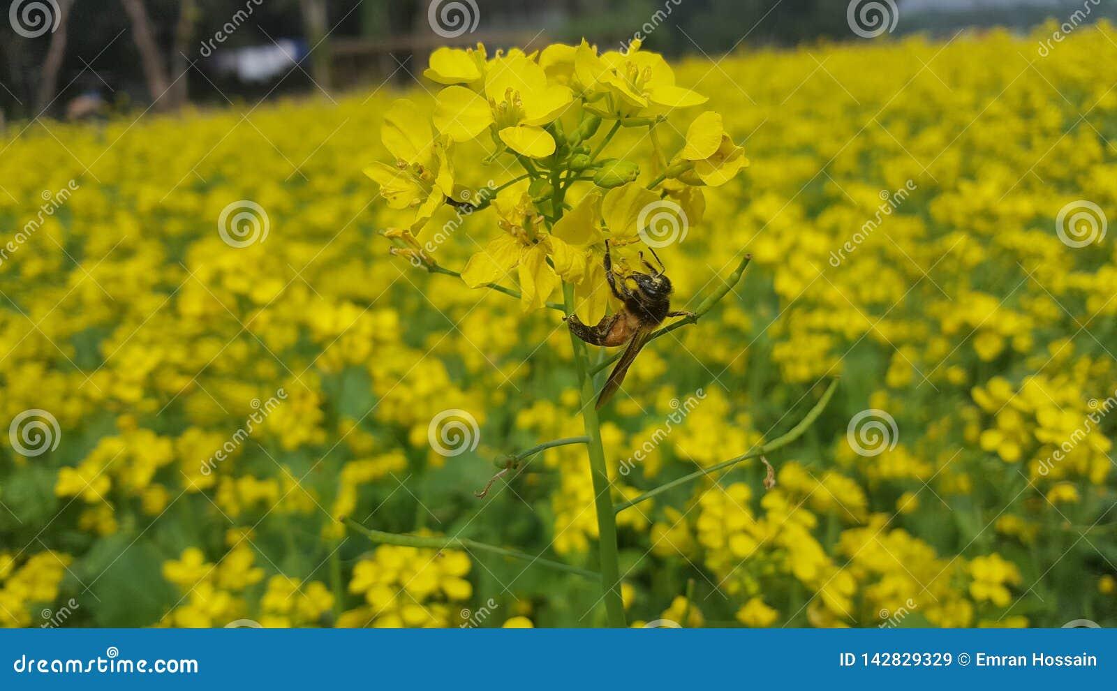 Η μέλισσα