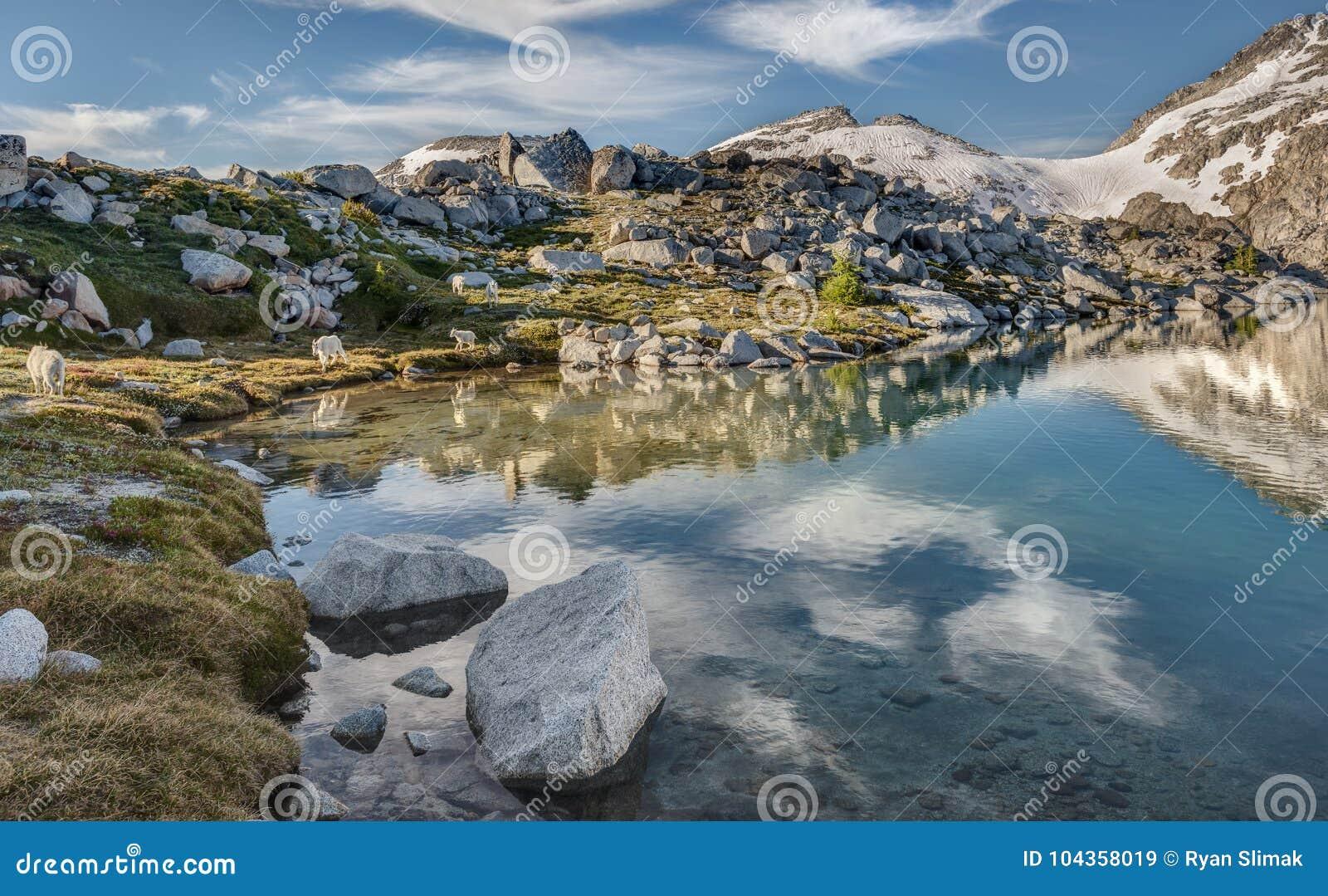 Η οικογένεια των αιγών βουνών περιπλανιέται από την αλπική λίμνη