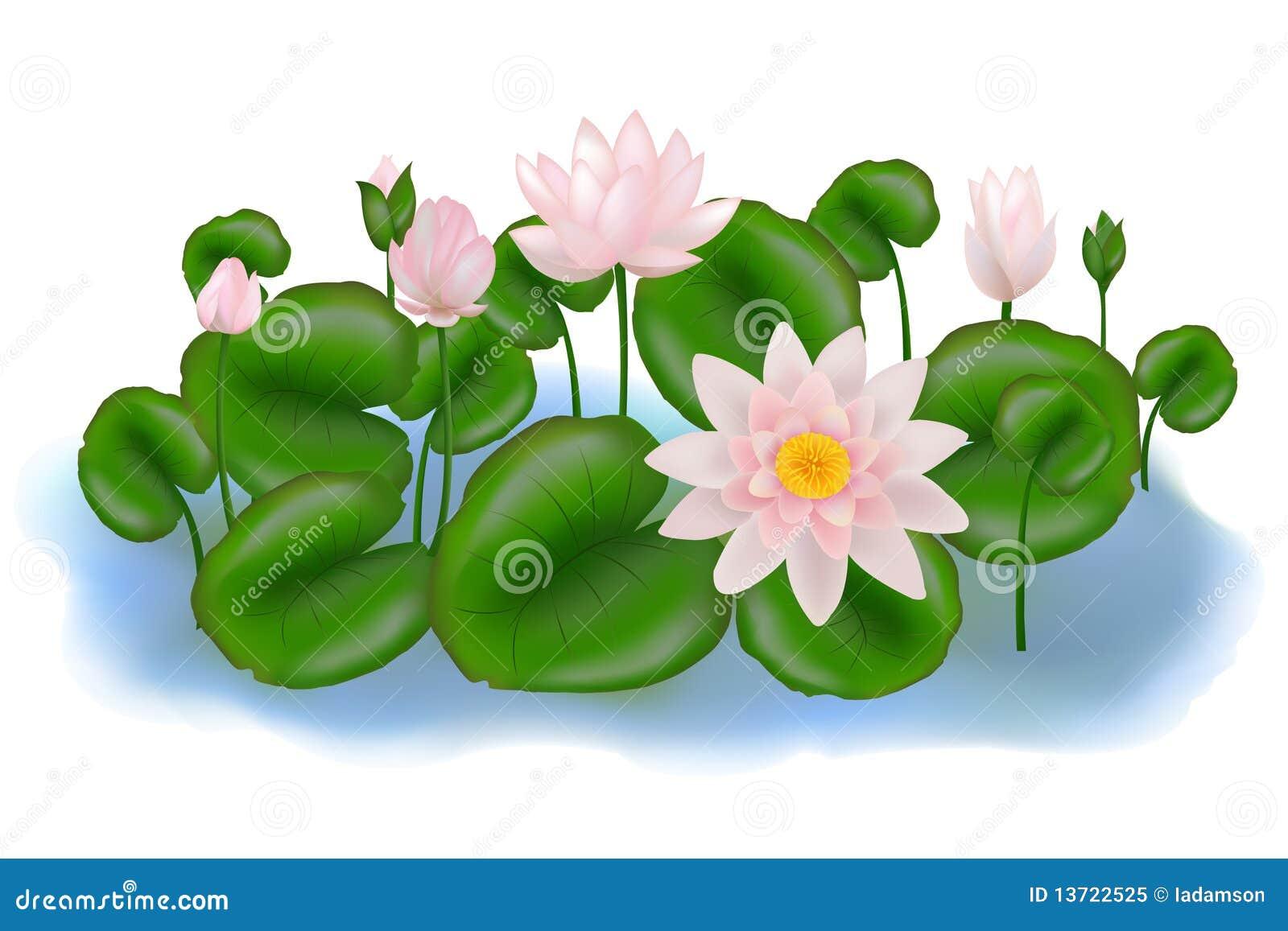 η ομάδα αφήνει lotuses το διάνυσμ&
