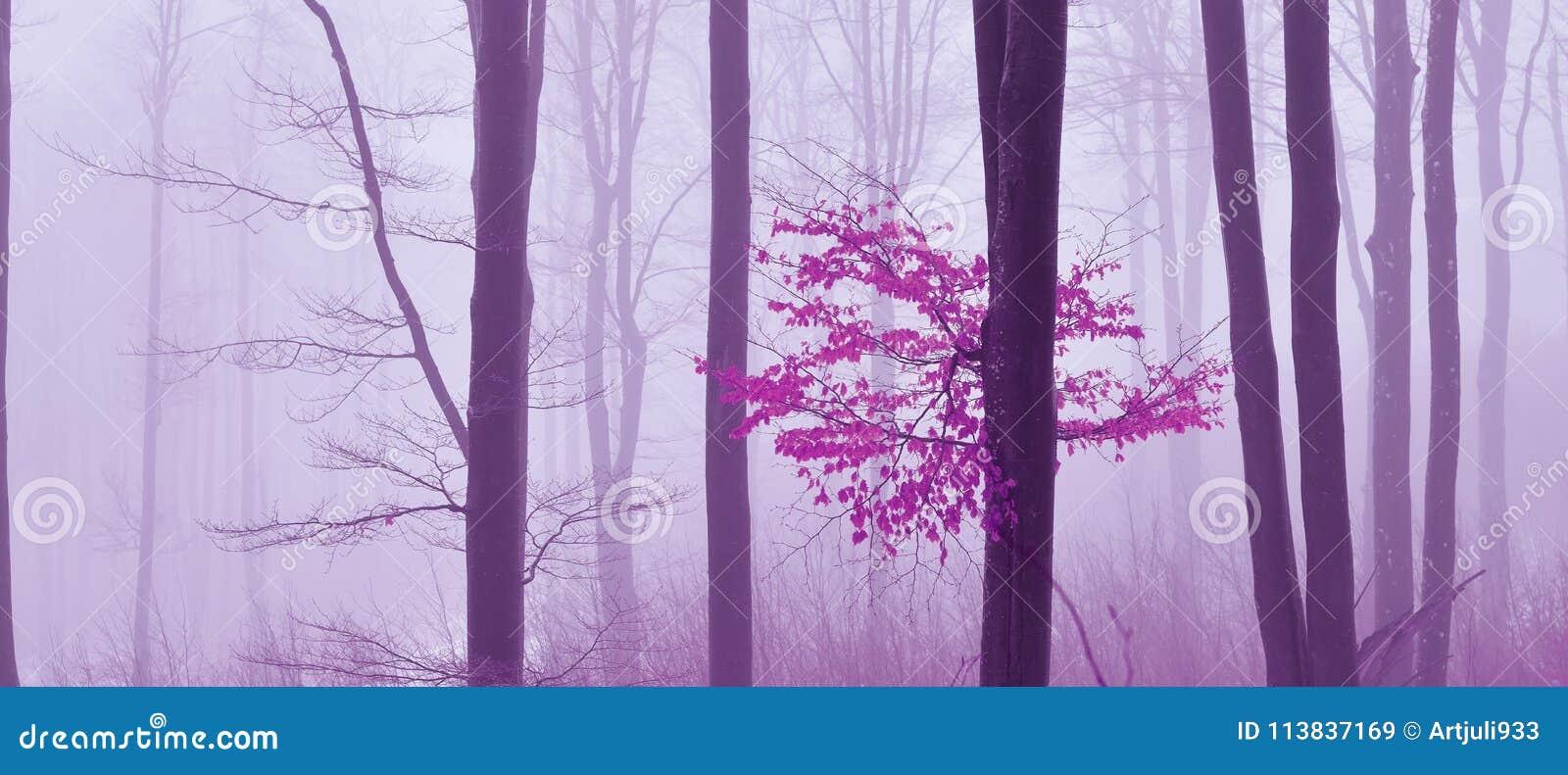 Η ομίχλη στο δάσος χρωμάτισε το απόκρυφο υπόβαθρο Μαγική forestMagic καλλιτεχνική ταπετσαρία παραμύθι Όνειρο, γραμμή Δέντρο σε έν