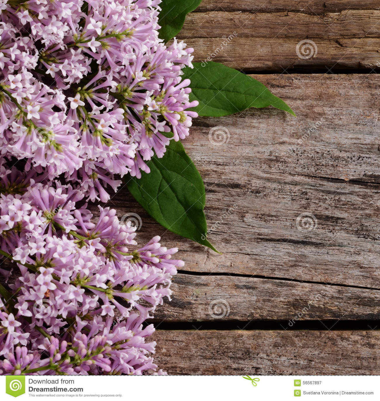 Download Η πασχαλιά λουλουδιών ένα ξύλινο υπόβαθρο Στοκ Εικόνα - εικόνα από οίστρο, φωτογραφία: 56567897