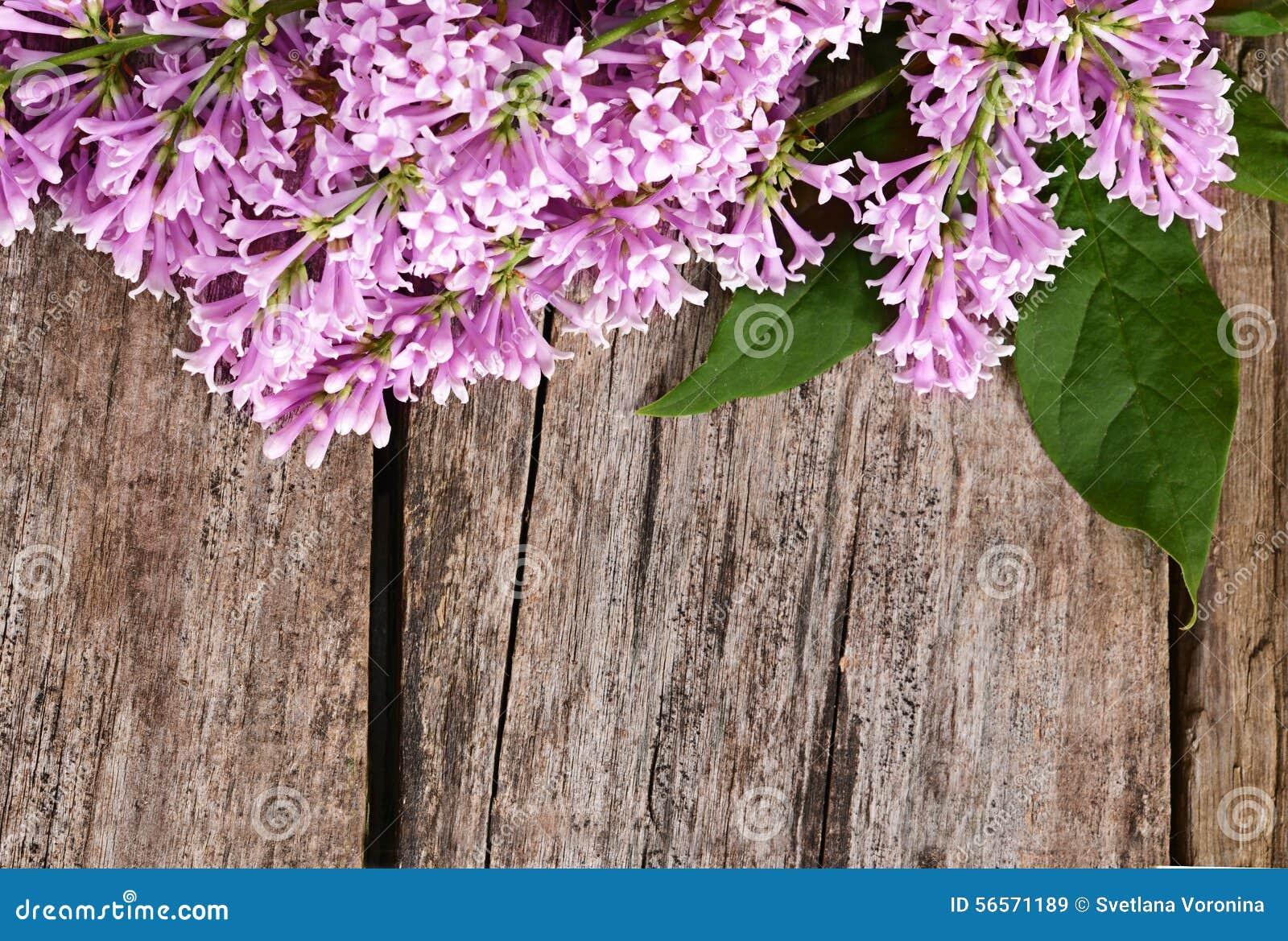 Download Η πασχαλιά λουλουδιών ένα ξύλινο υπόβαθρο Στοκ Εικόνα - εικόνα από phlox, ανθοδεσμών: 56571189