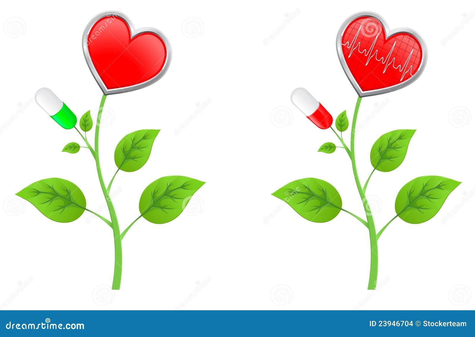 η πράσινη καρδιά αφήνει τον κόκκινο μίσχο