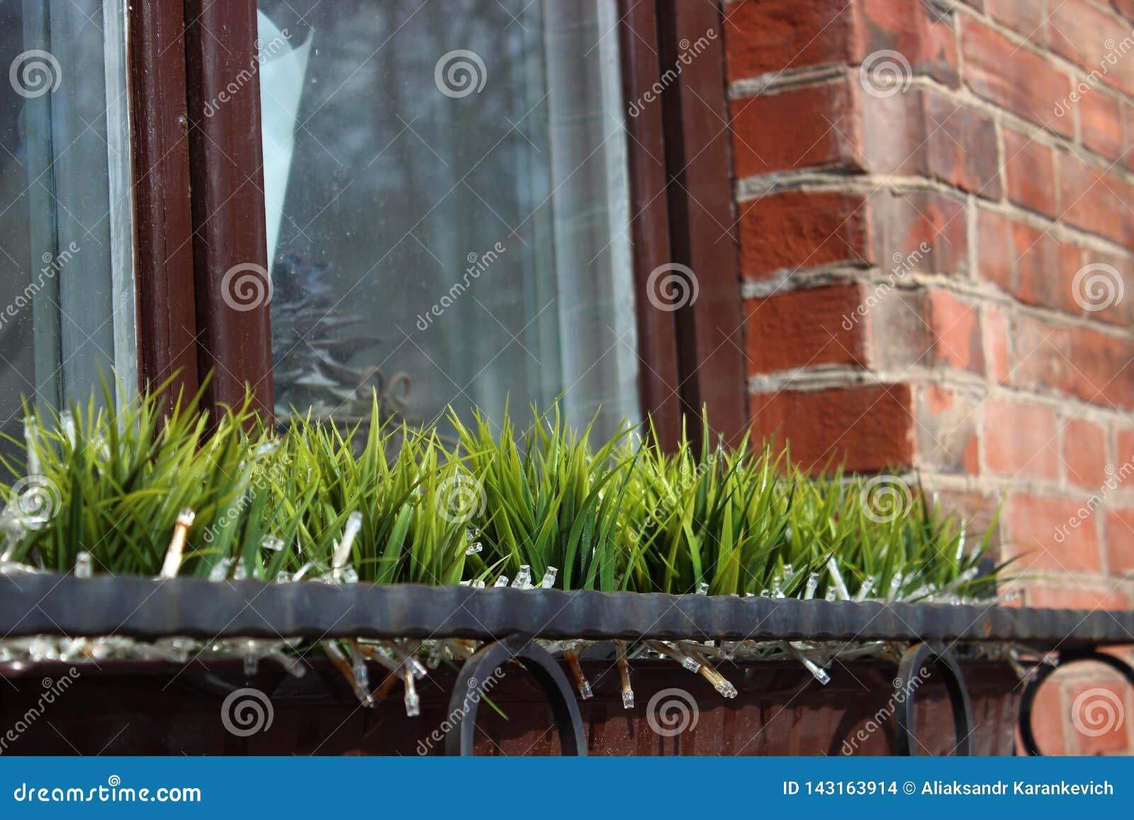 Η πρώτη βλάστηση μετά από το χειμώνα, διακόσμηση παραθύρων χλόη σε ένα βάζο ενάντια σε ένα παράθυρο και έναν τουβλότοιχο Μερική ε